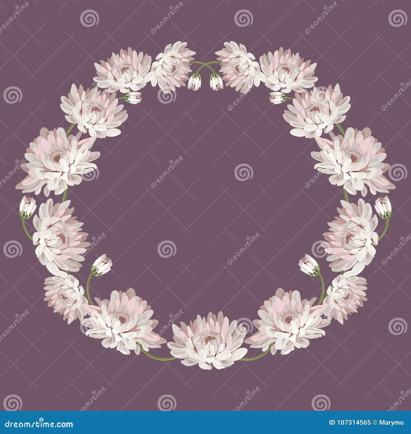 хризантемы Декоративная рамка круга с цветками для вашего дизайна Флористический шаблон карточки также вектор иллюстрации притяжк