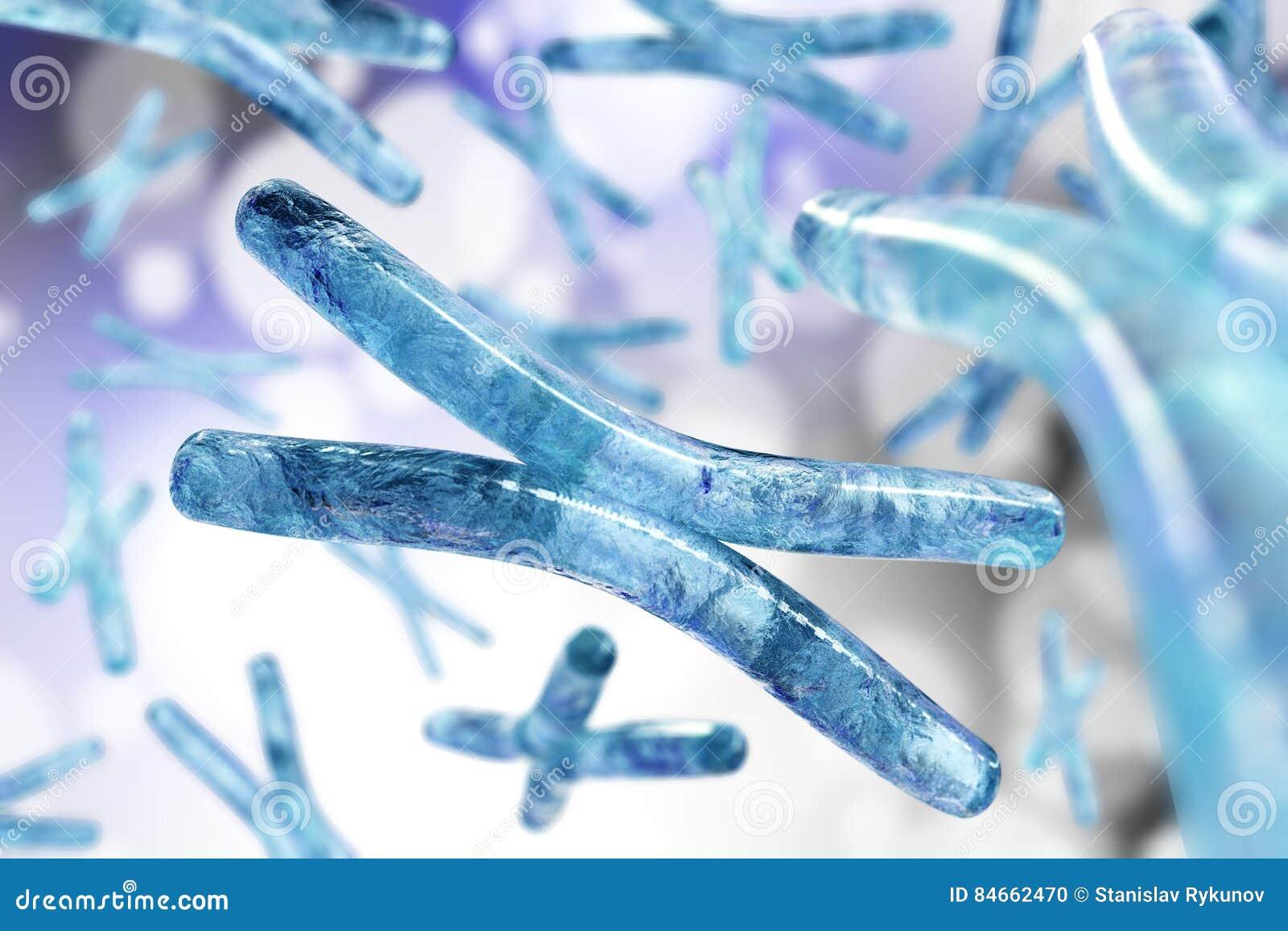 хромосома Дна