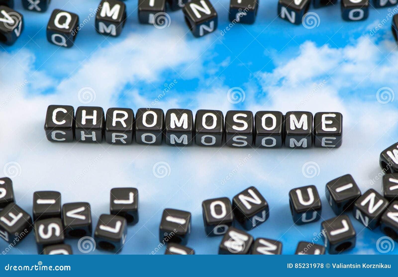 Хромосома слова