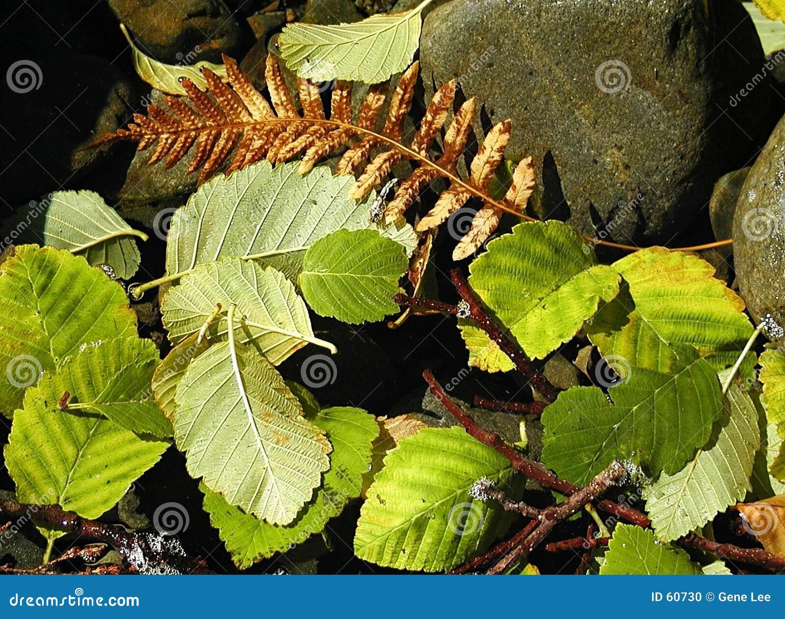 художнические плавая листья