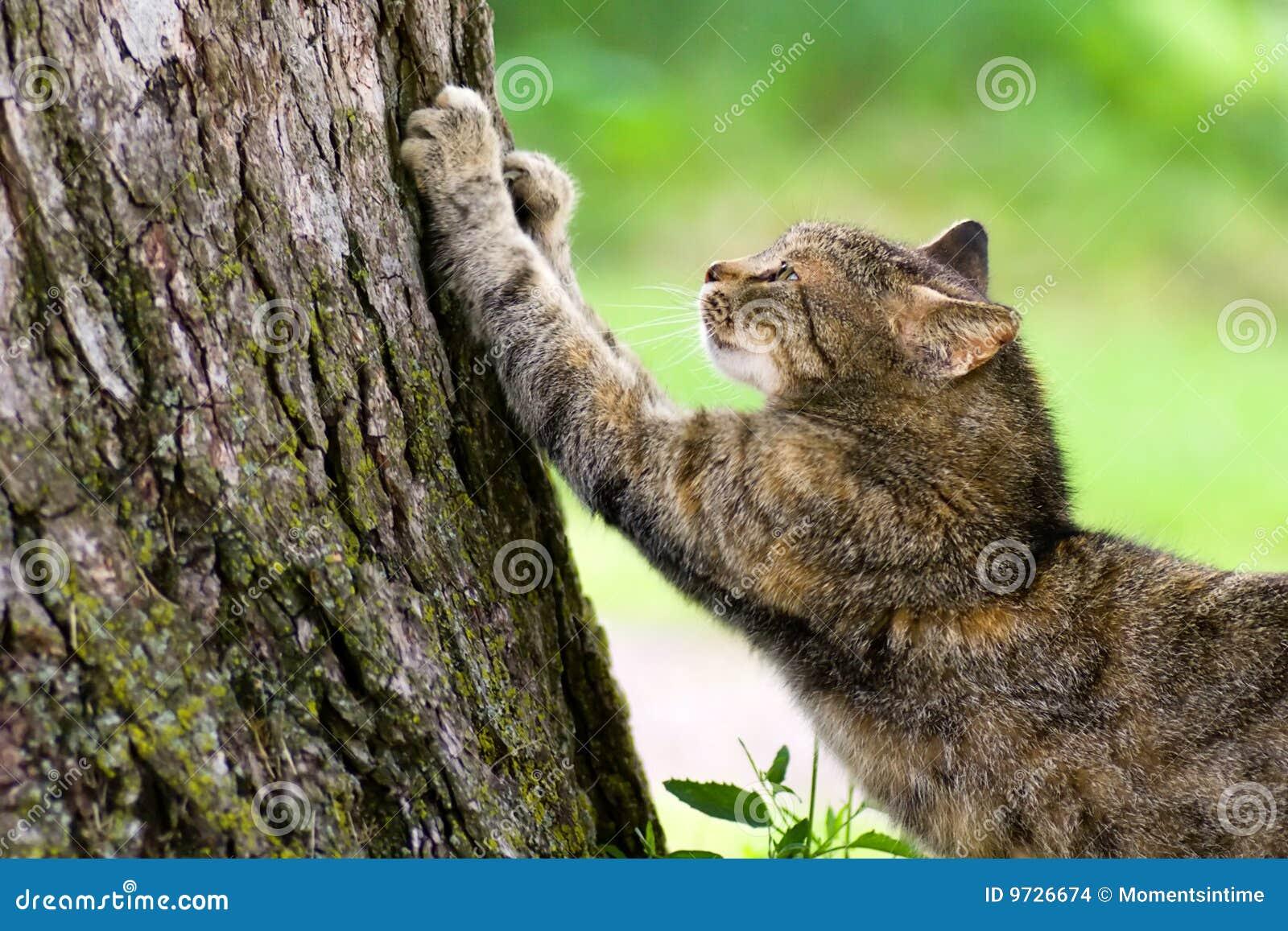 царапать столба кота