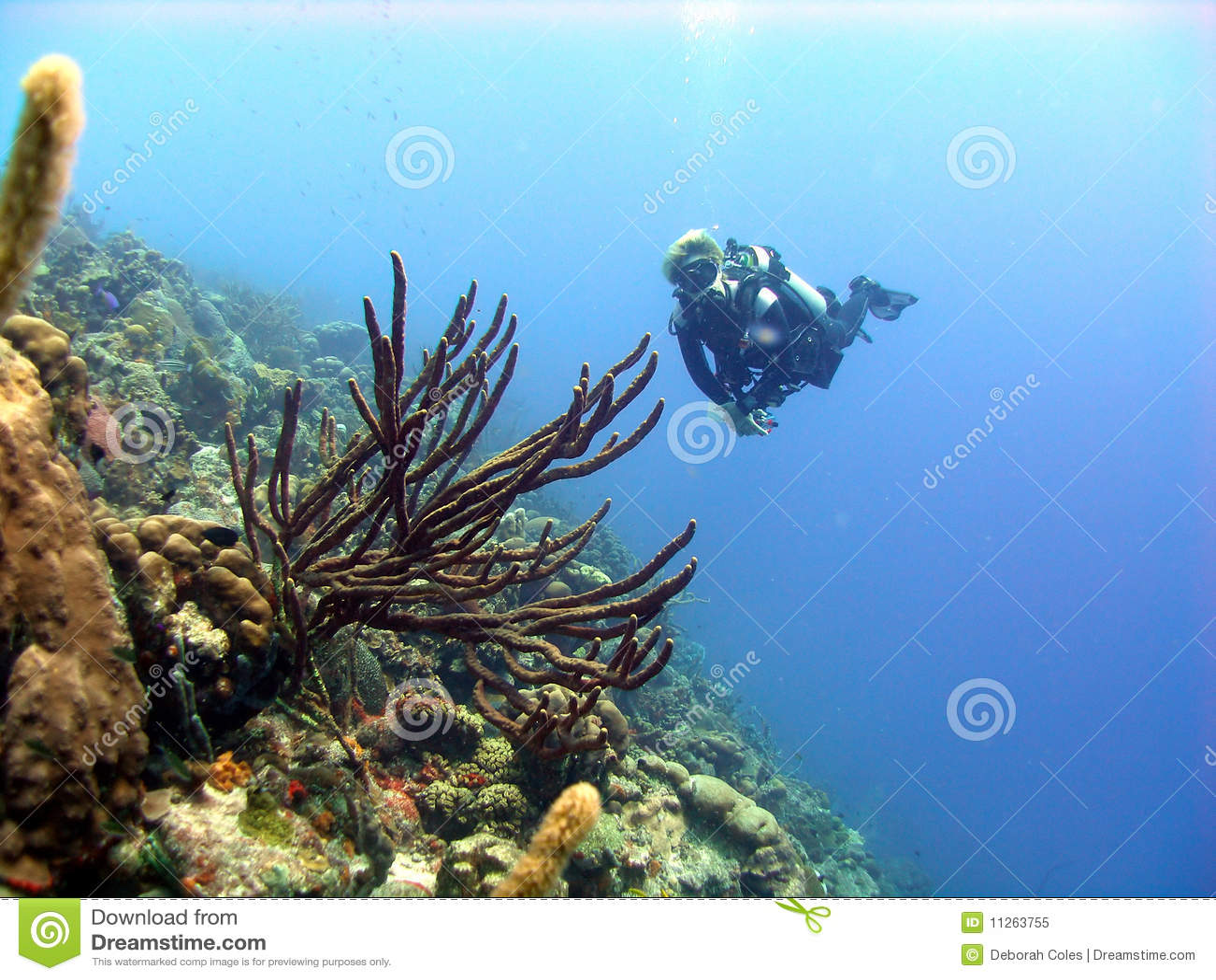 цветастое место кораллового рифа