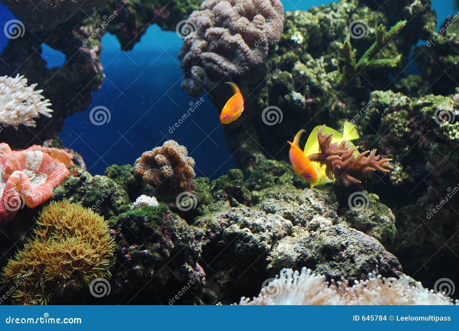 Download цветастые рыбы стоковое фото. изображение насчитывающей snorkel - 645784