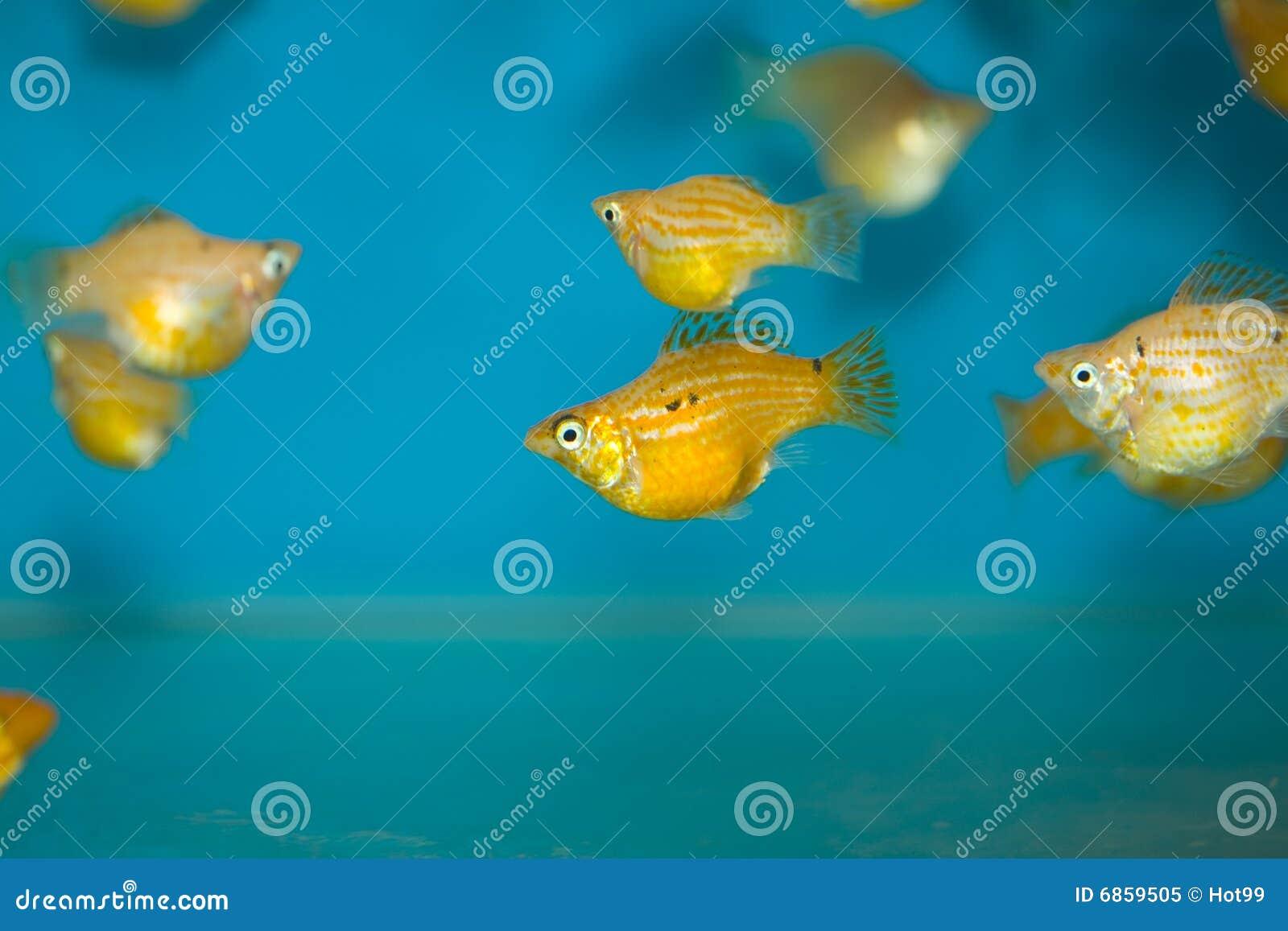 цветастые рыбы