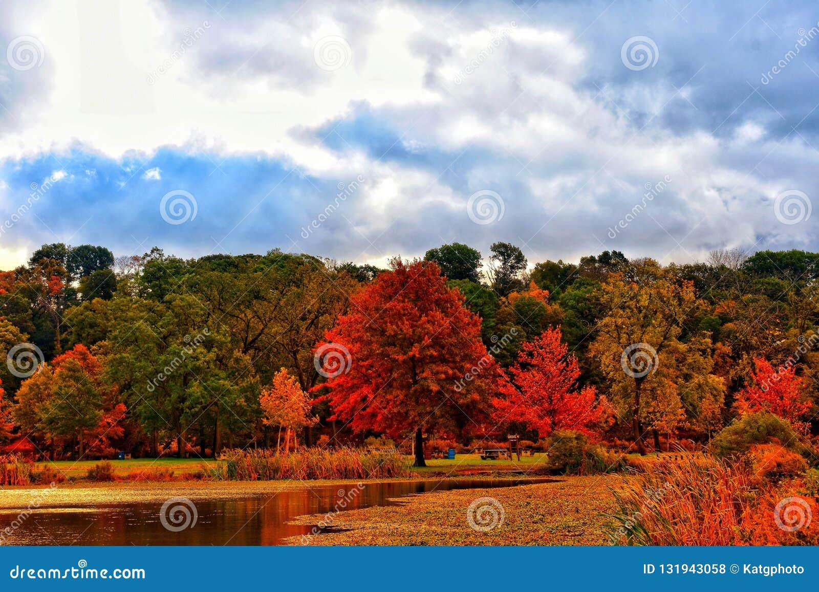 Цвета осени выделяют лес около пруда