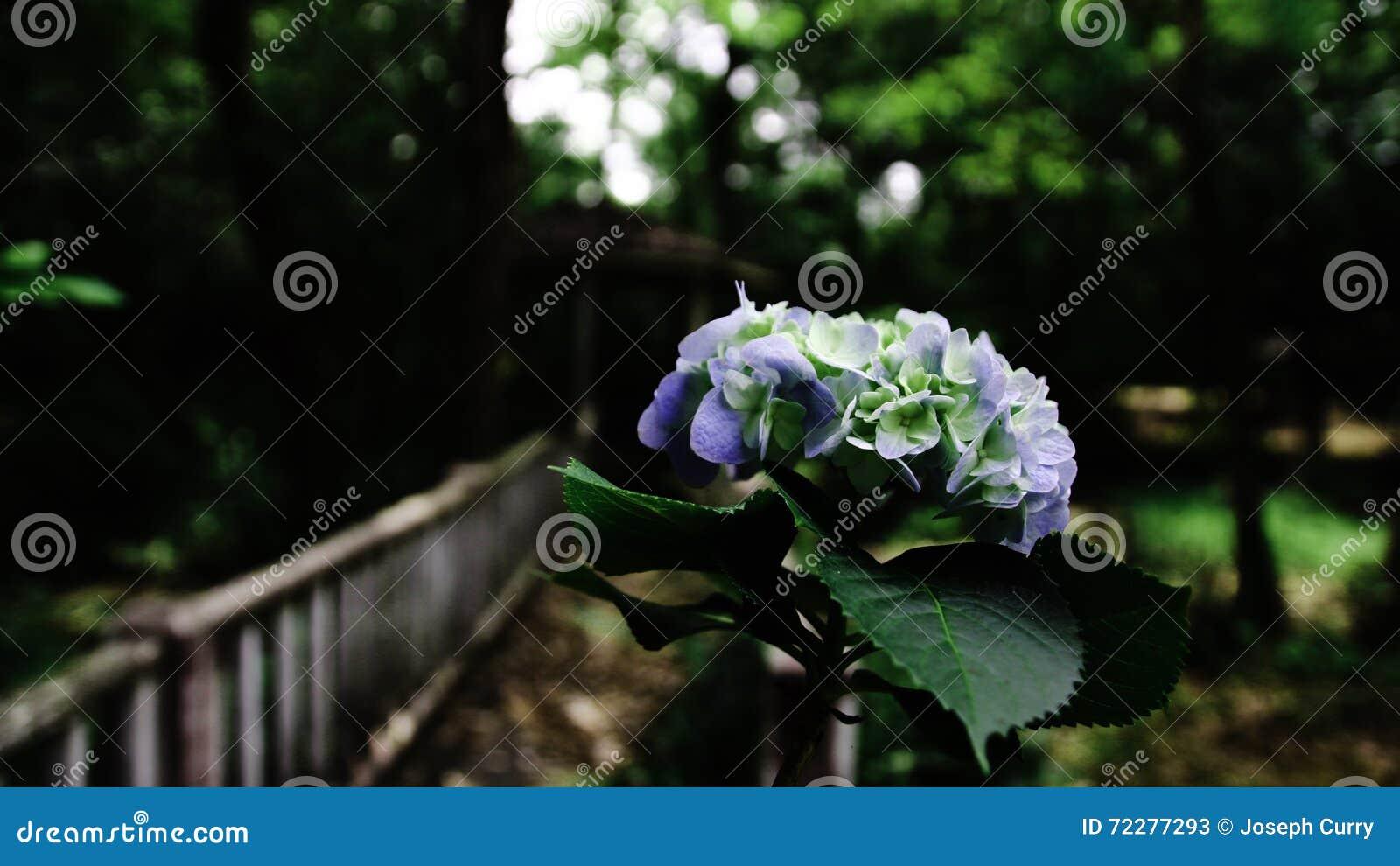 Download Цветене весны стоковое изображение. изображение насчитывающей сумрак - 72277293