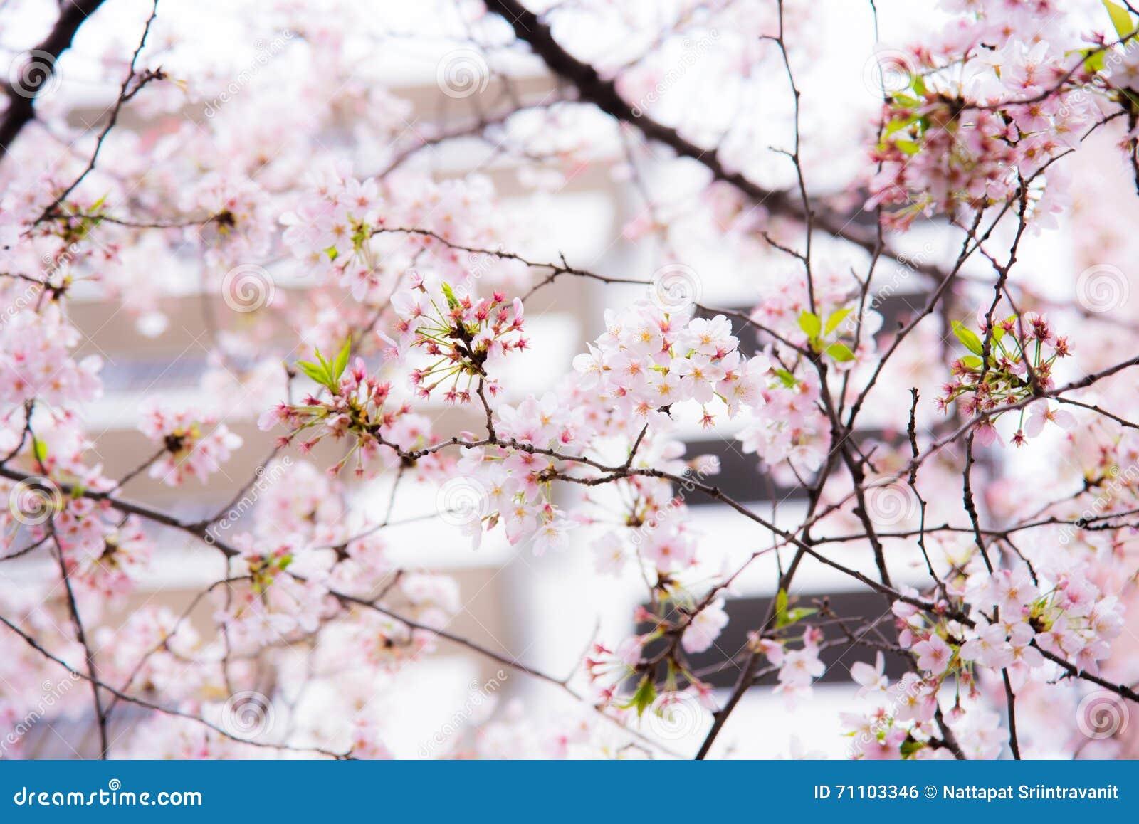 Картинки японской весны