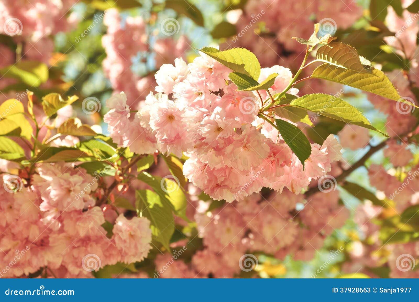 Цветение весны