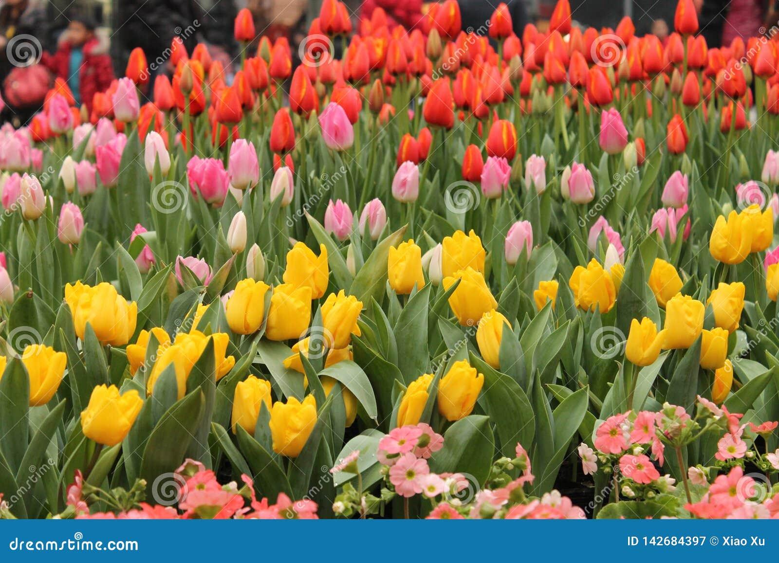 Цветения весны