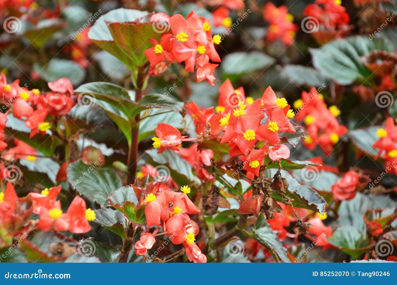 Цветок круглый год цветет