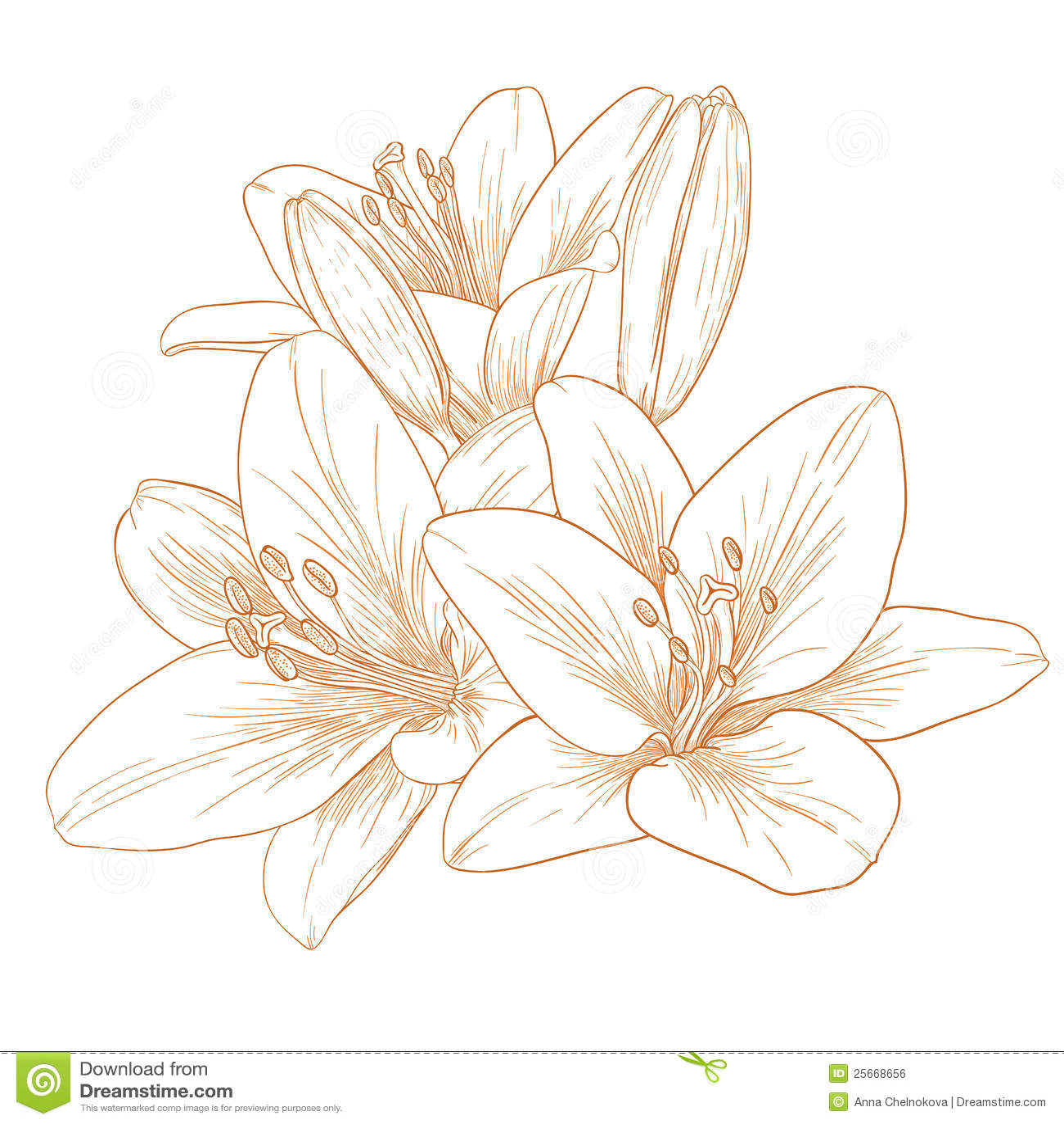 цветет вектор лилий