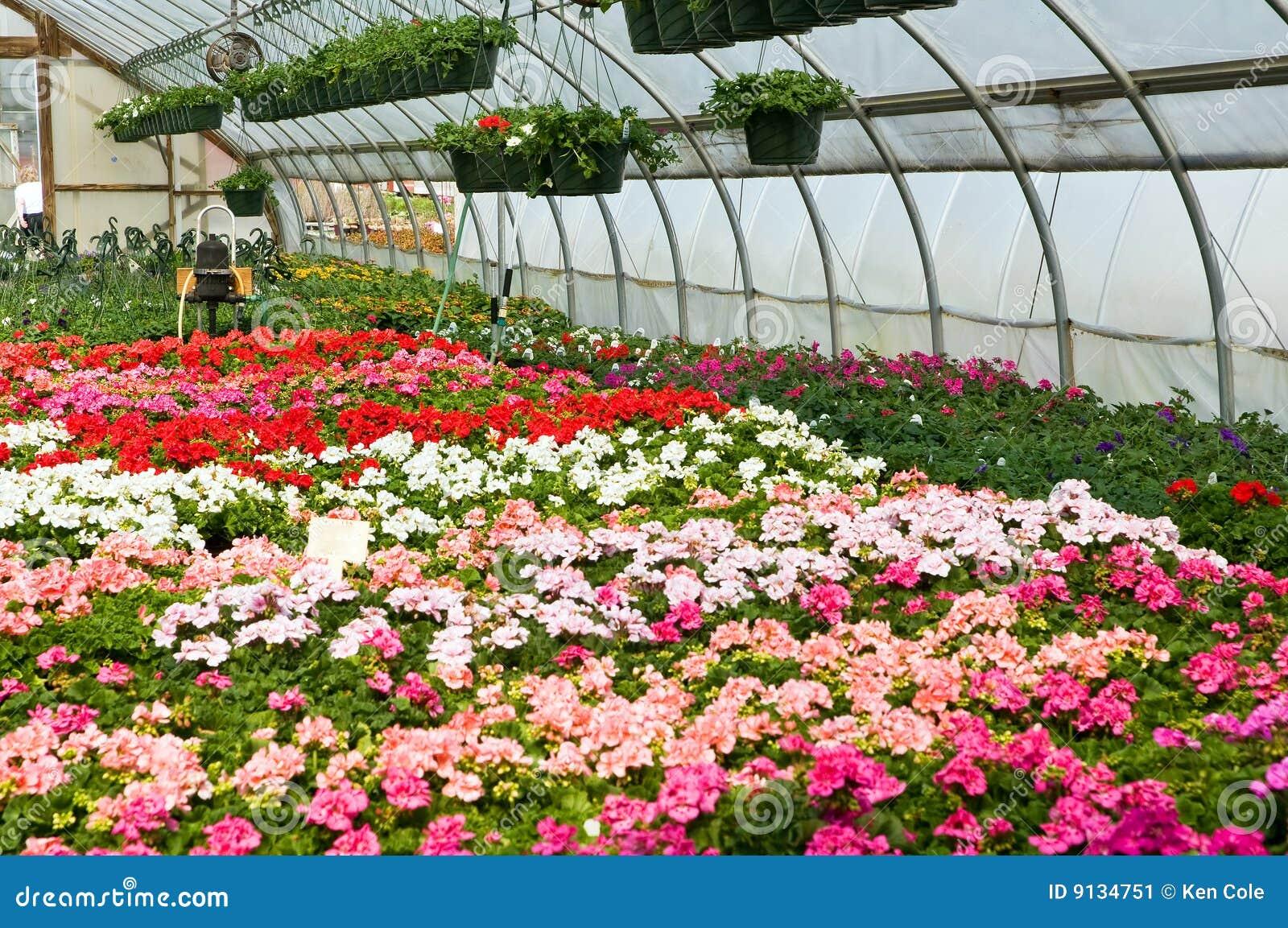 цветет весна парника