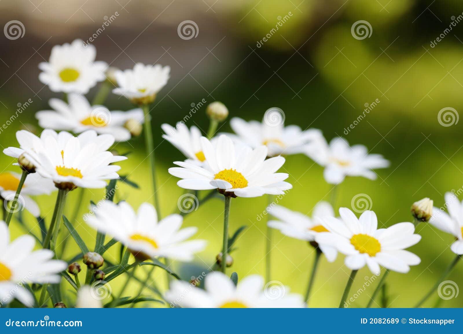 цветет лето