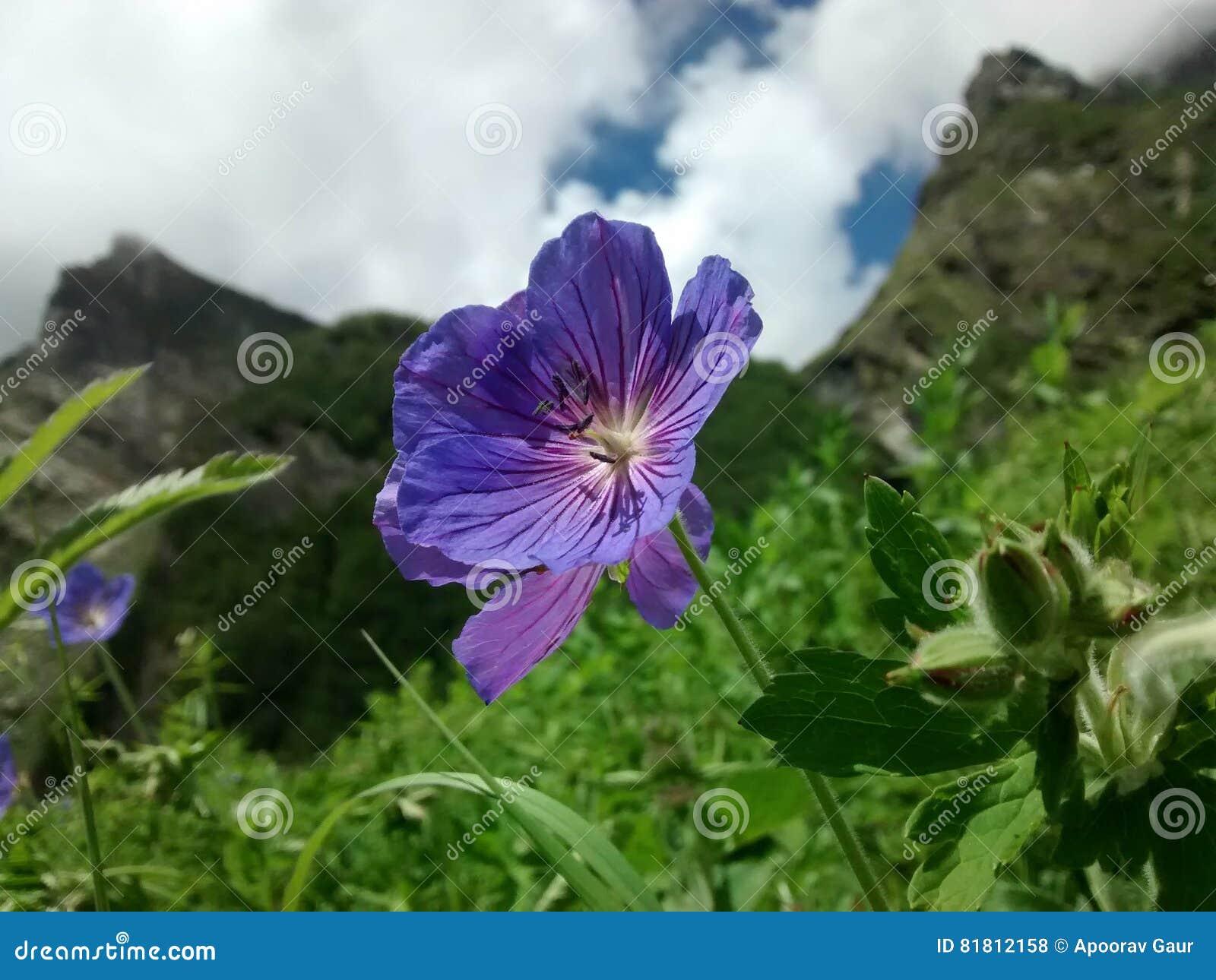 цветет долина