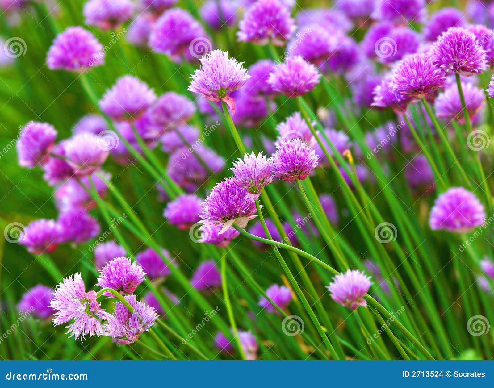 цветет трава