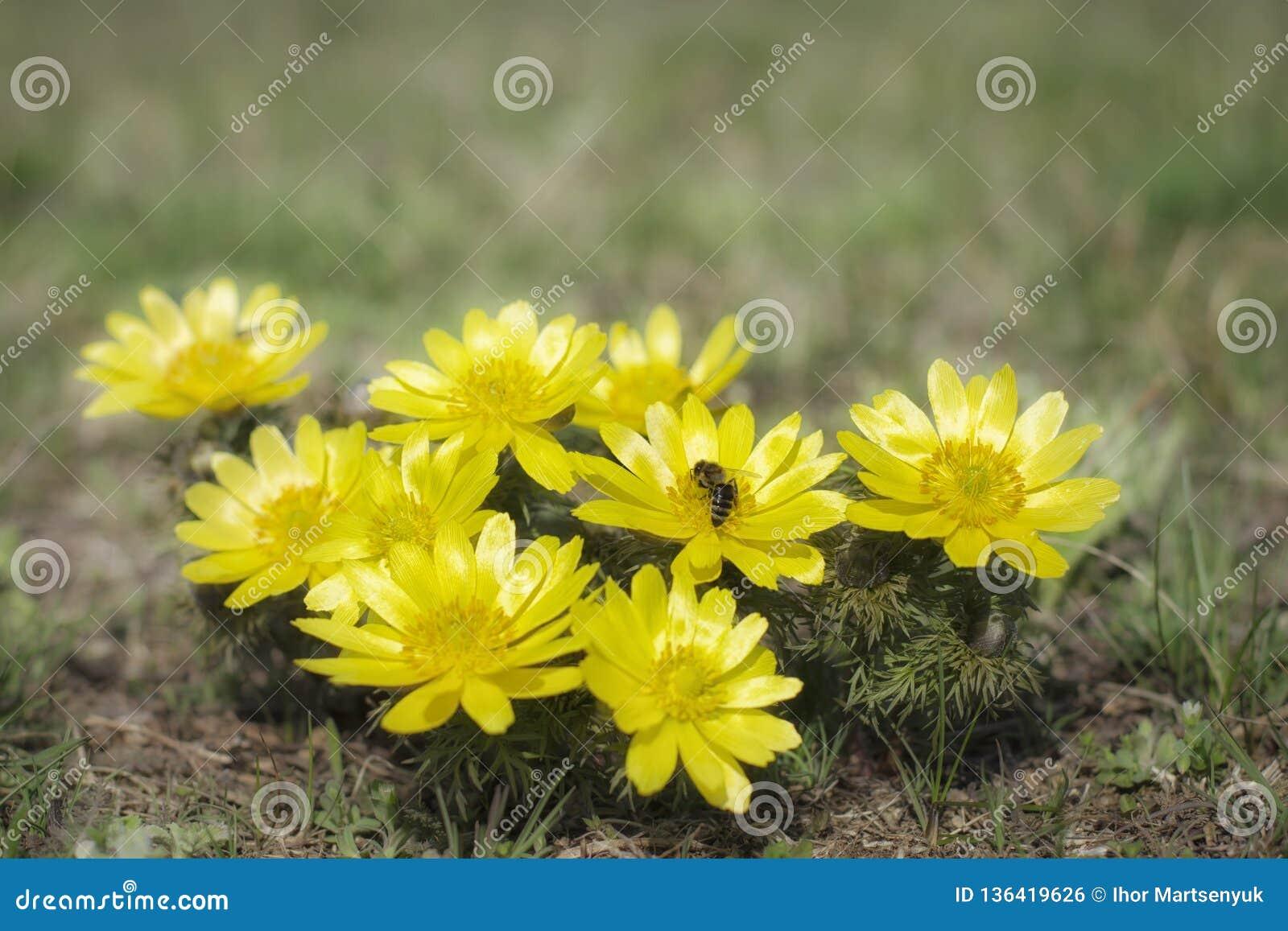 Цветки весны в степи