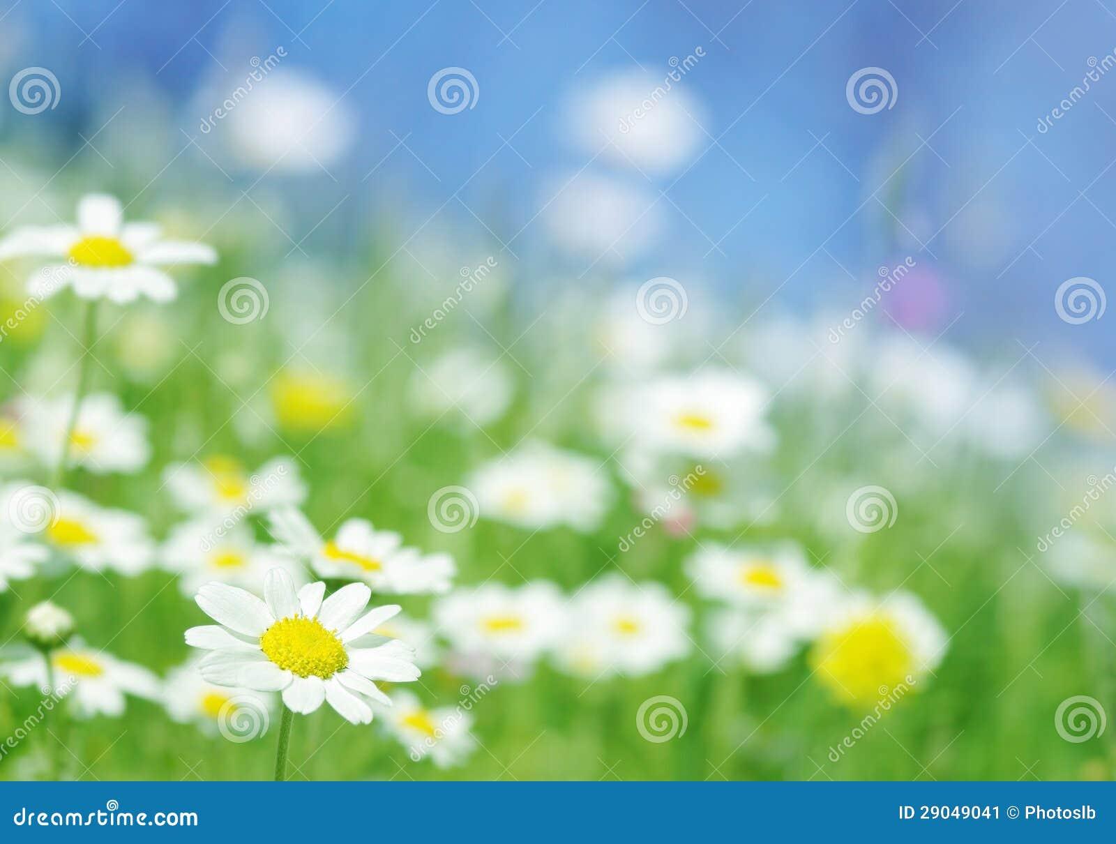 Цветки весны