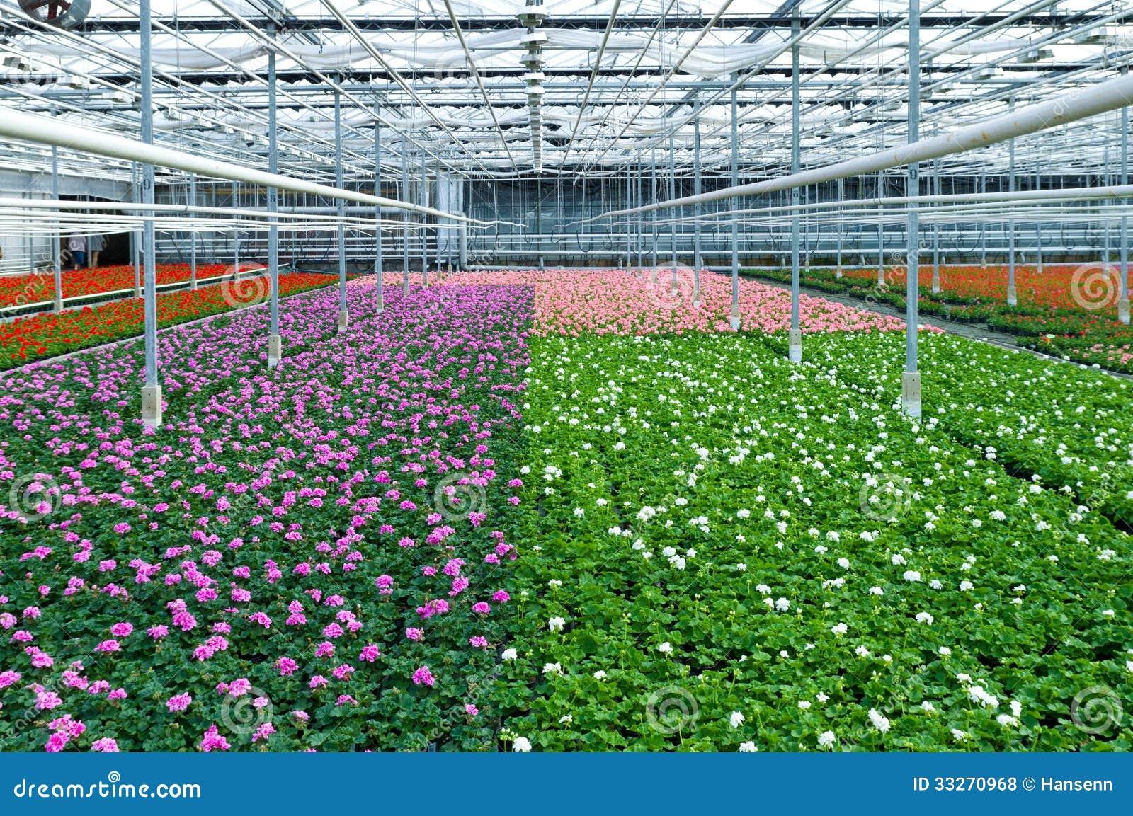 Цветки в парнике