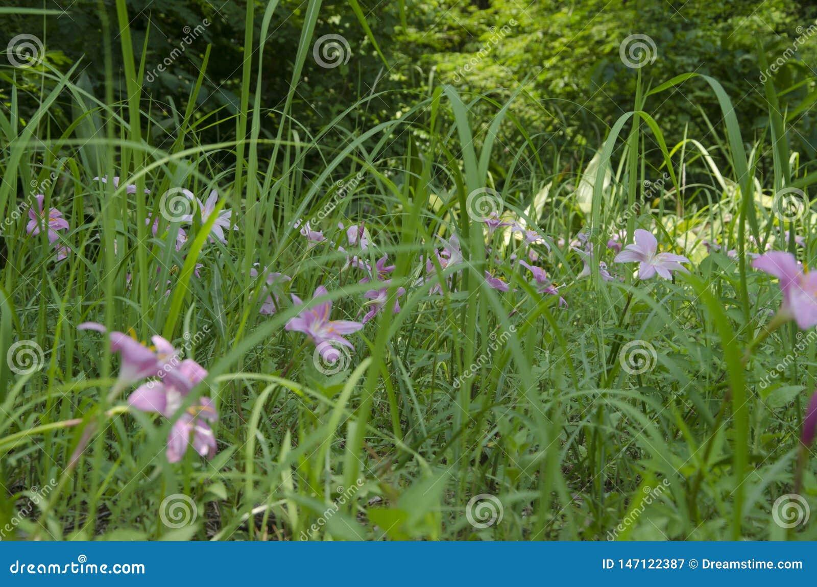 Цветки в траве