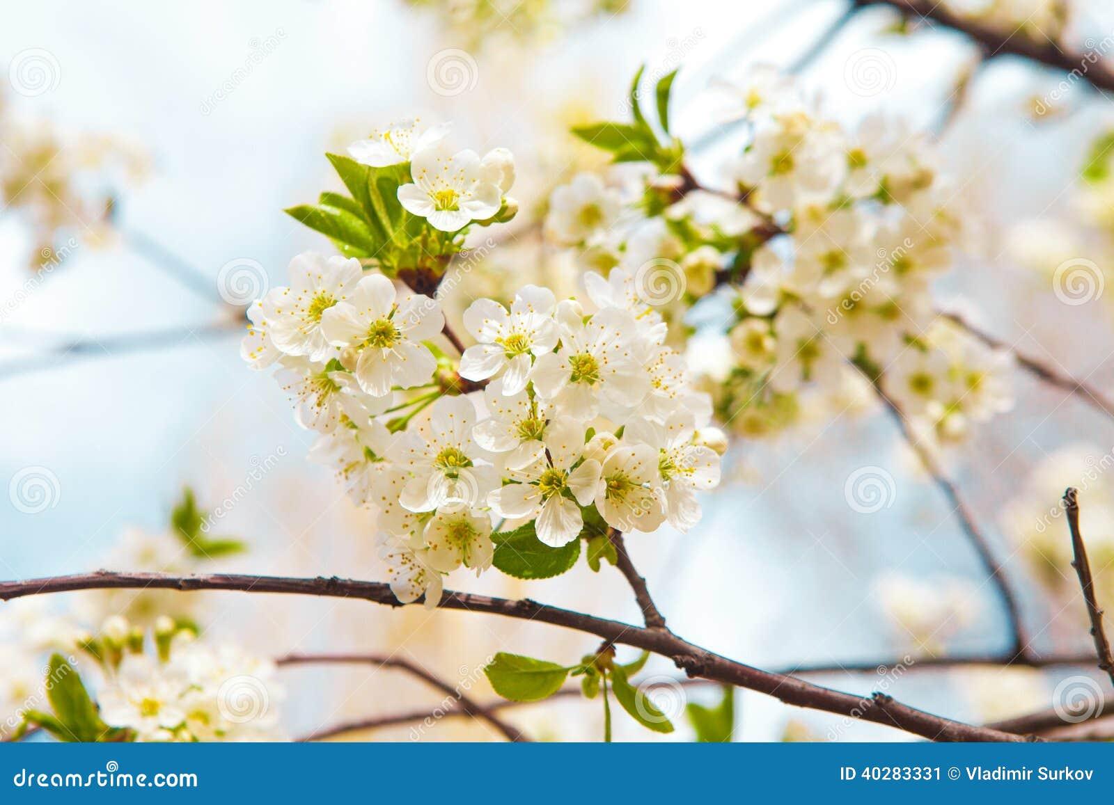 Цветки дерева весной