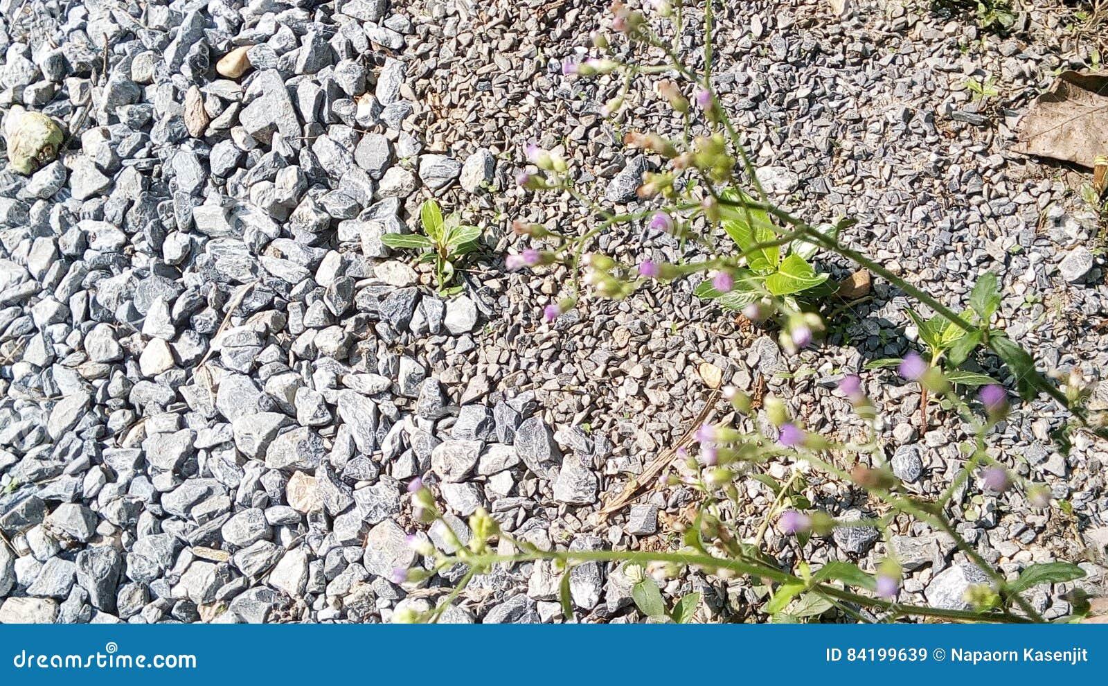 цветки засевают белизна травой