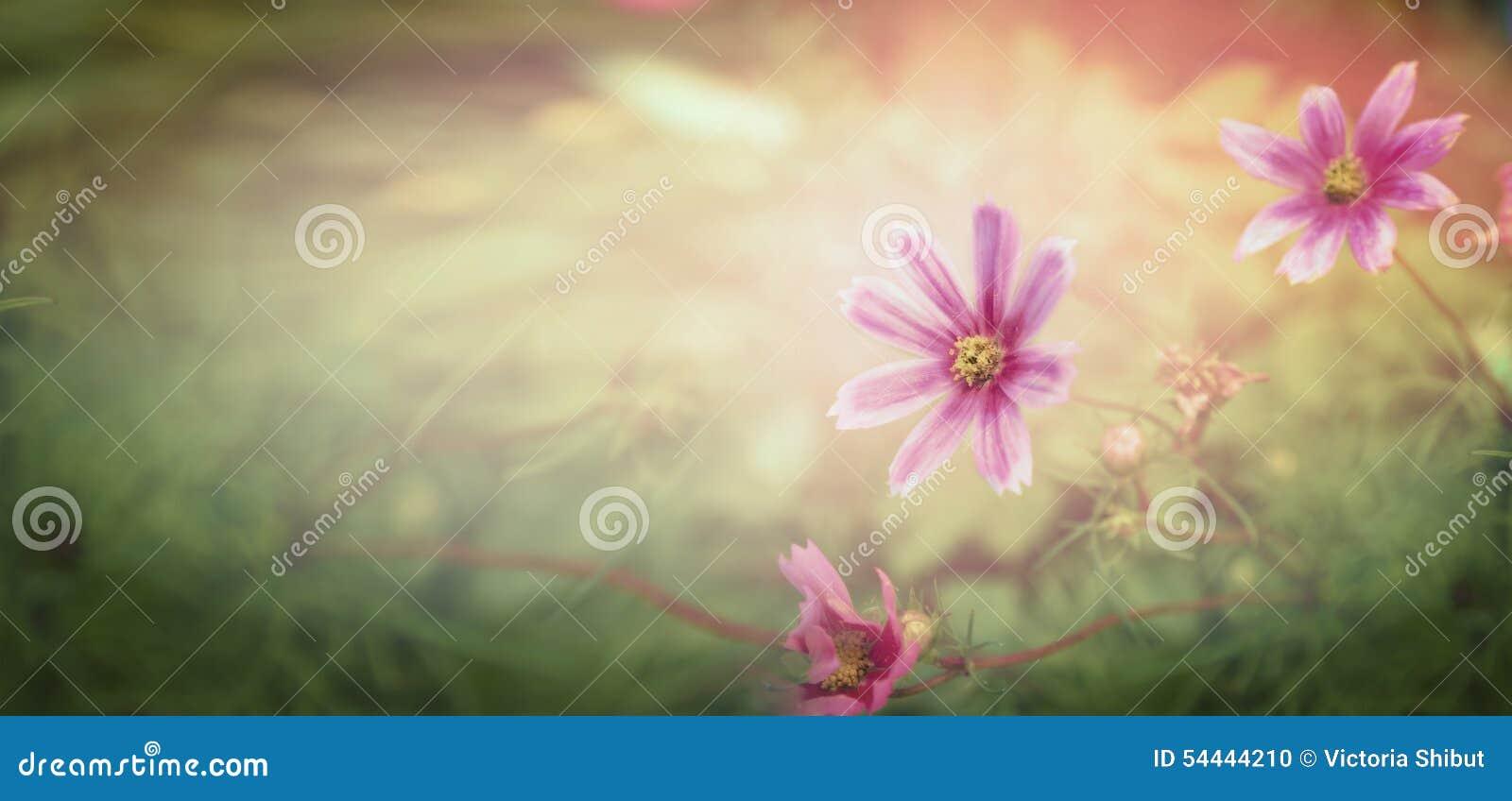 Цветки захода солнца на предпосылке природы, знамени