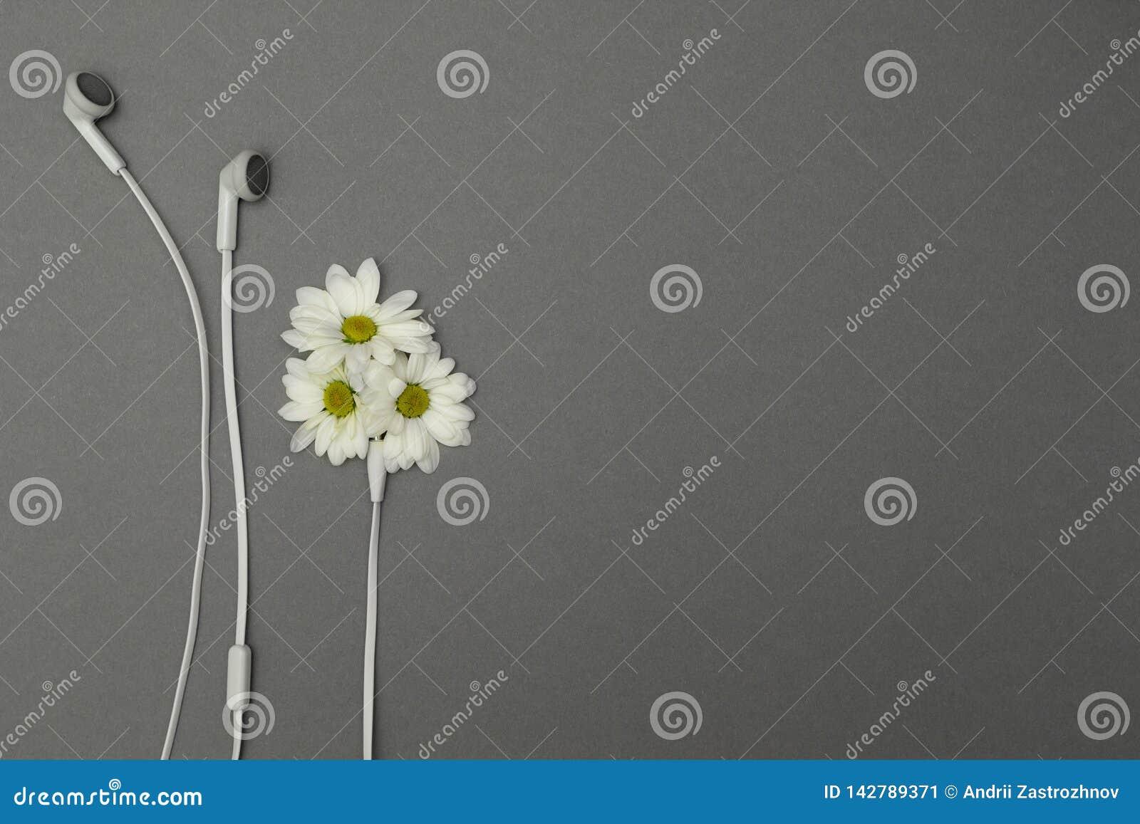 Цветки и наушники, место для текста