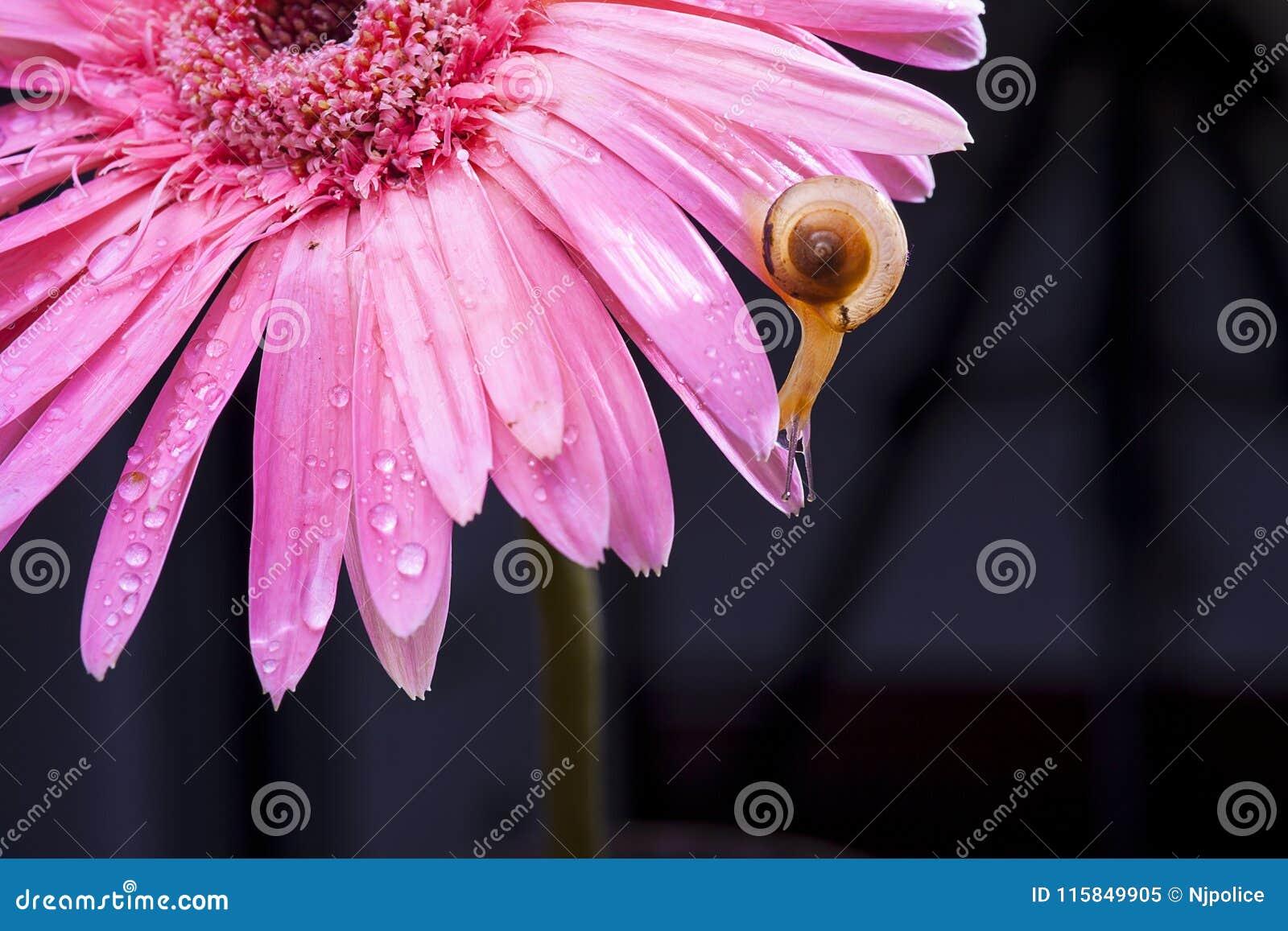 Цветки и улитка