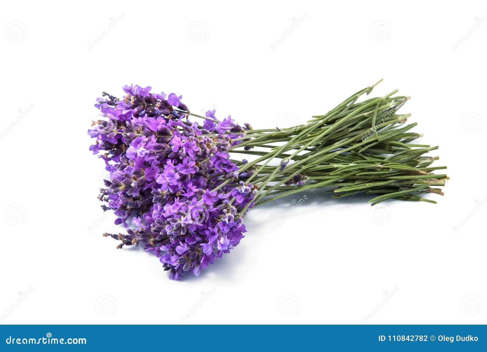 Цветки лаванды на белой предпосылке