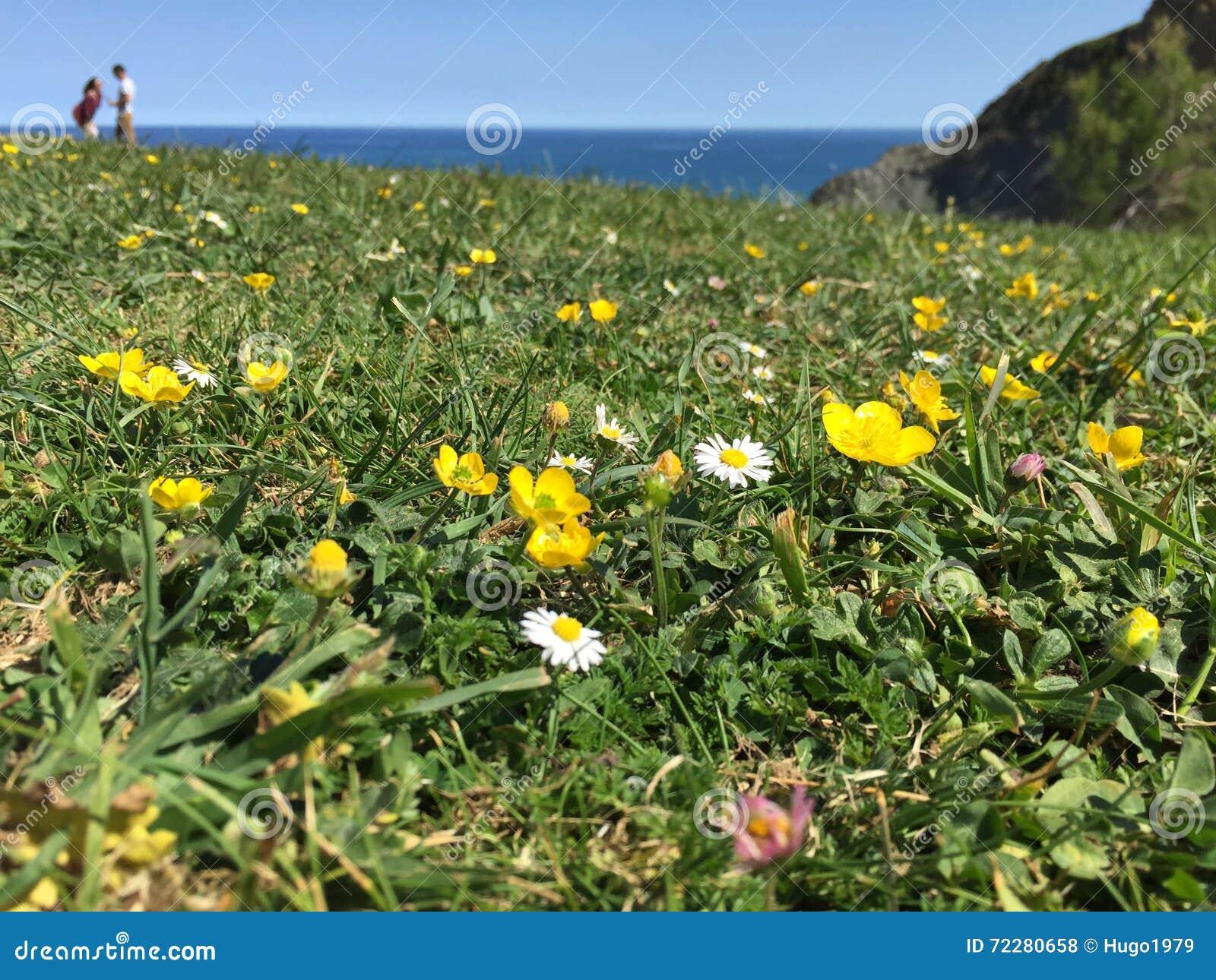 Download Цветки на зеленой траве стоковое фото. изображение насчитывающей трава - 72280658