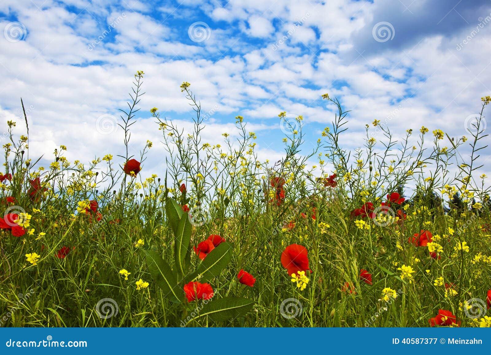 Цветки на крае луга