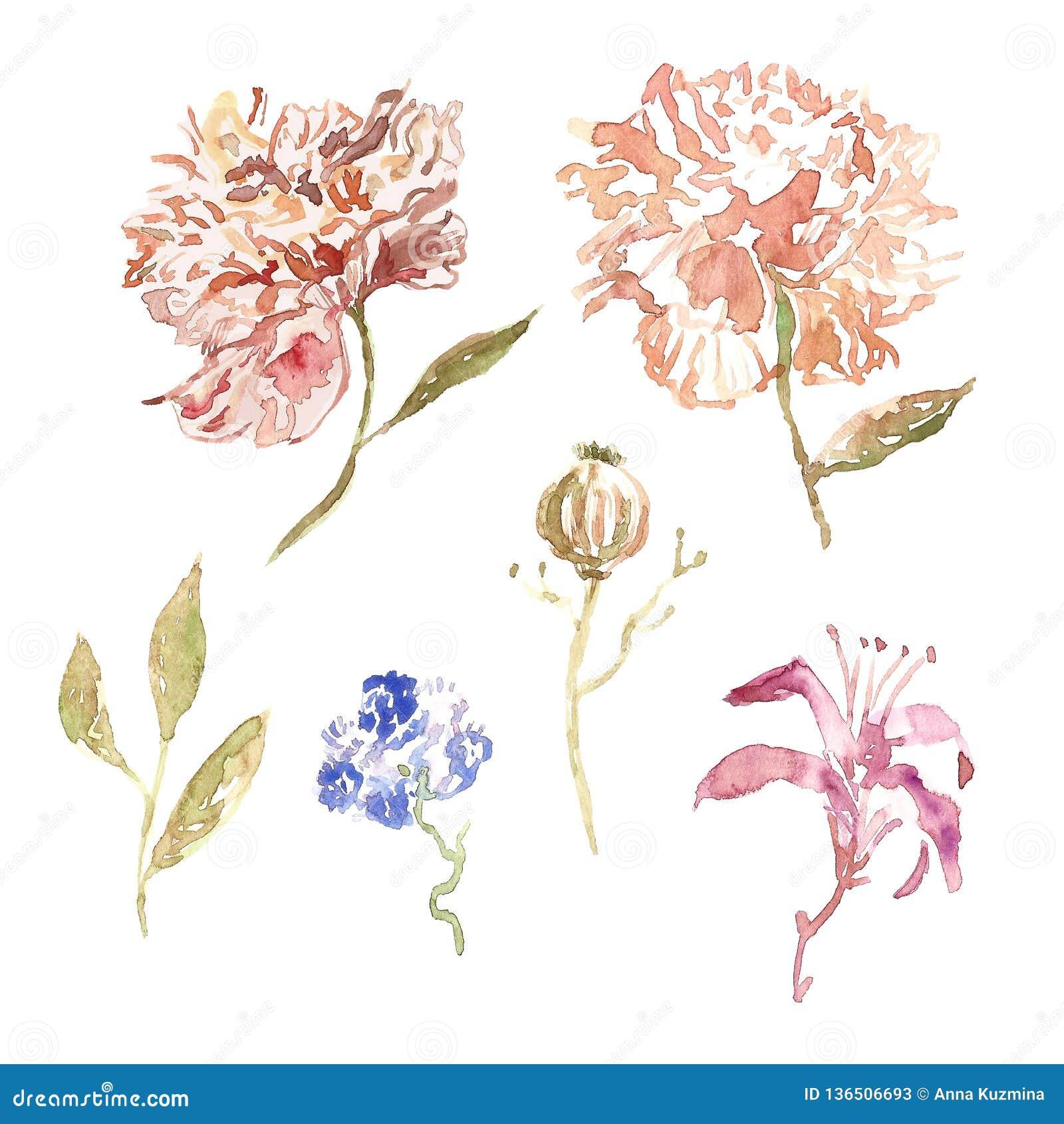 Цветки пиона акварели в ультрамодном бежевом и розовом цвете с листьями изолированными на белой предпосылке Ботаническое illustra
