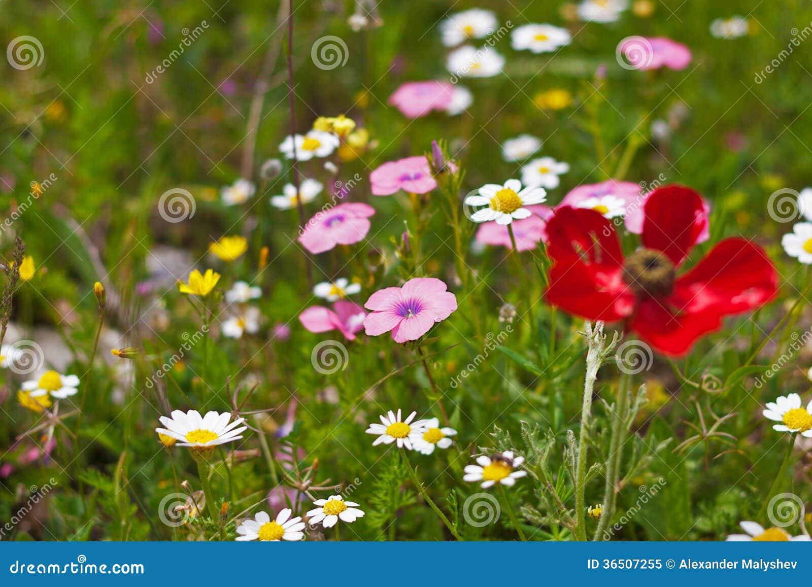 Цветки покрашенные многократной цепью