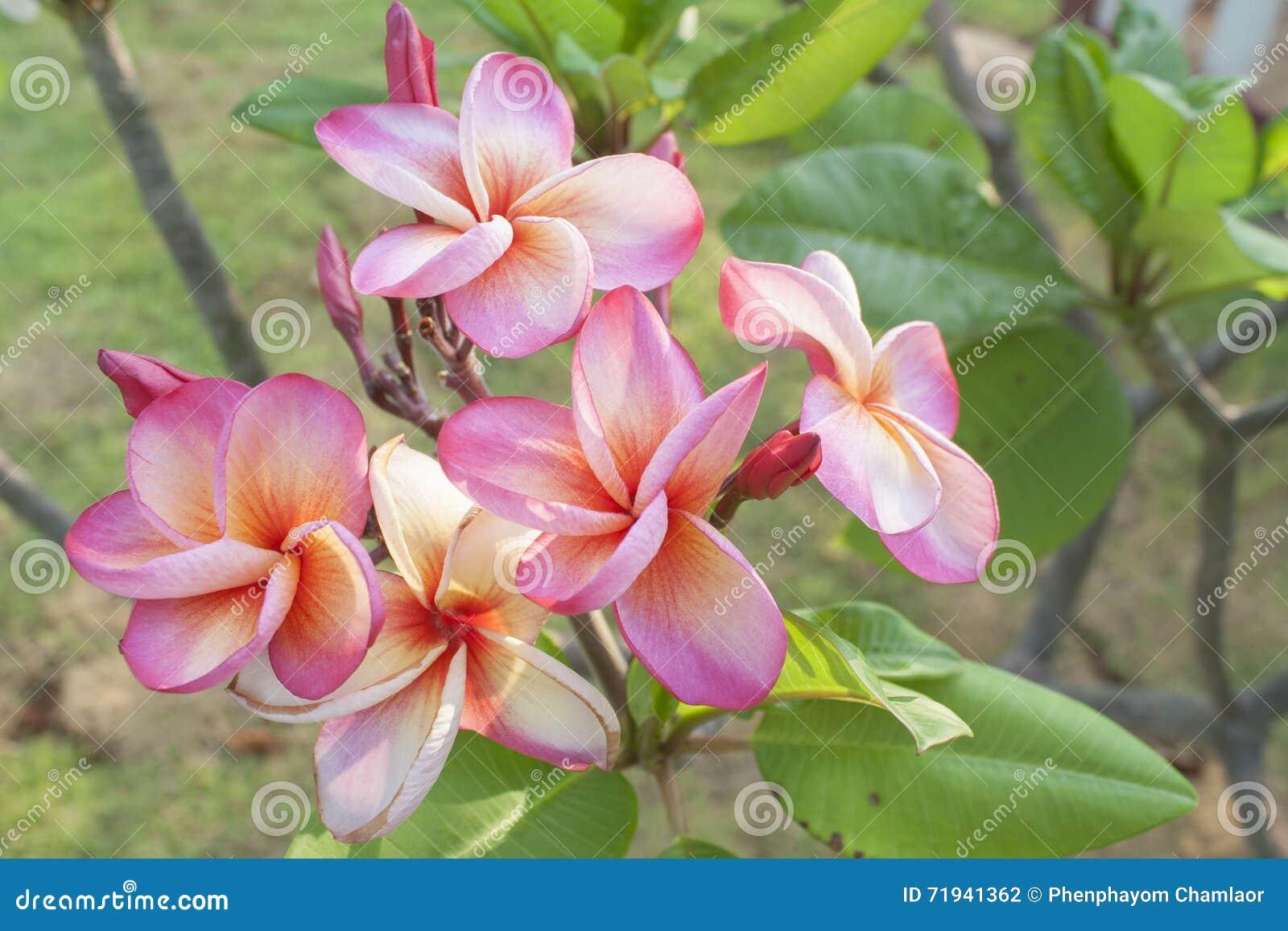 Цветки природы предпосылки