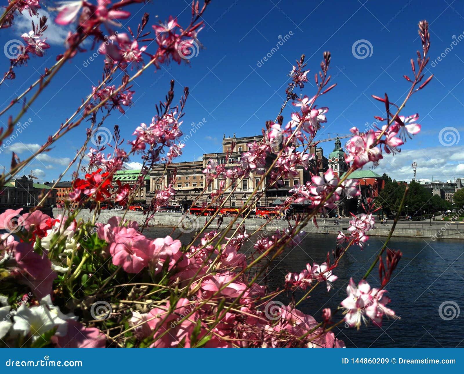 Цветки против озера и города, предпосылки Стокгольма