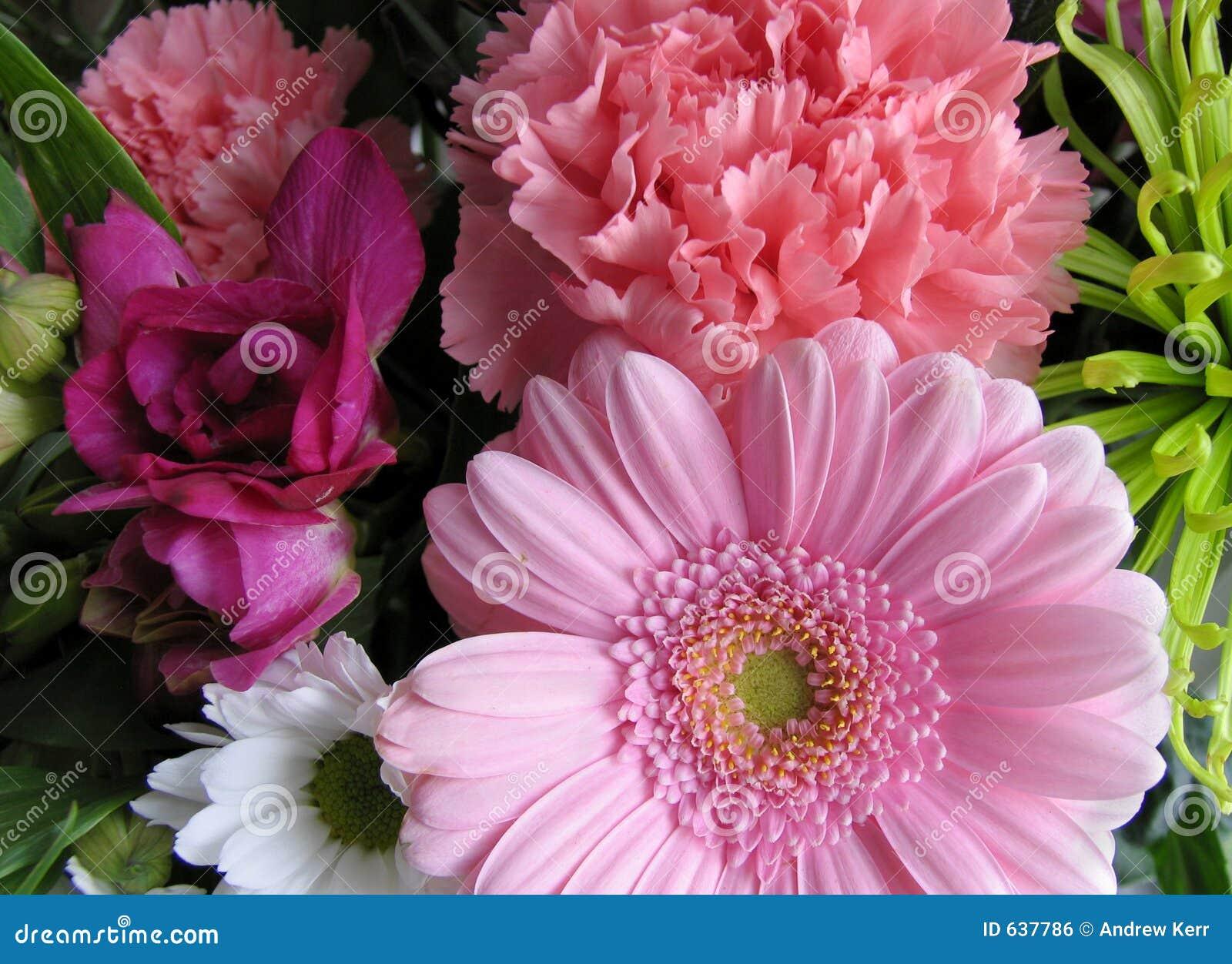 Download цветки пука стоковое фото. изображение насчитывающей пинк - 637786