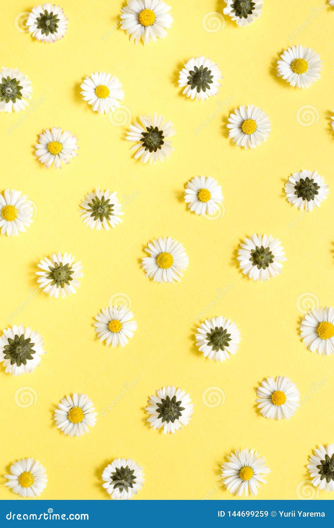 Состав цветков Цветки стоцвета на пастельной желтой предпосылке Весна, концепция лета