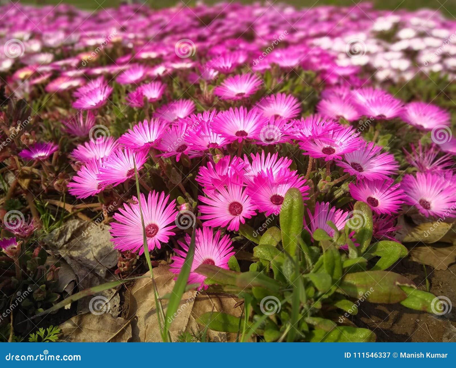 Цветки с лист в парке