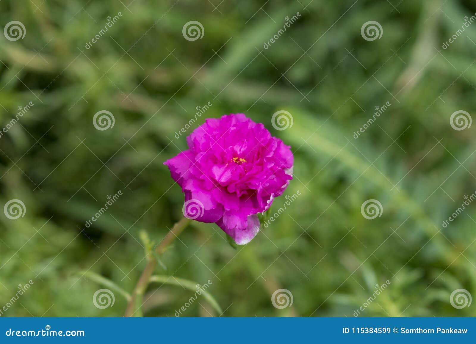 Цветки с самого начала