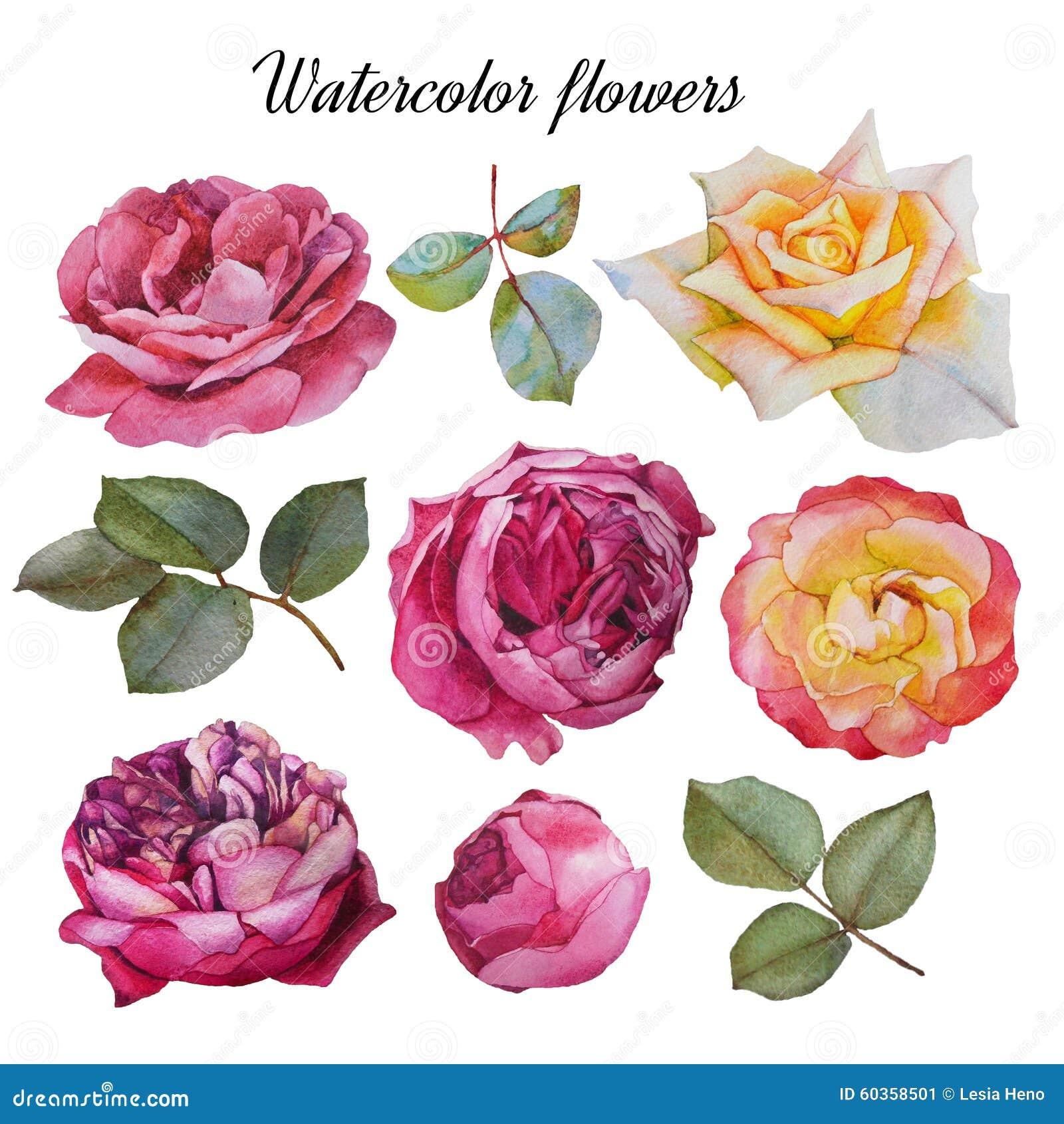 Цветки установленные роз и листьев акварели