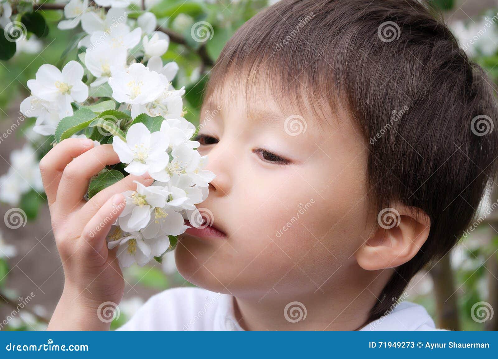 Цветки яблони мальчика пахнуть blossoming