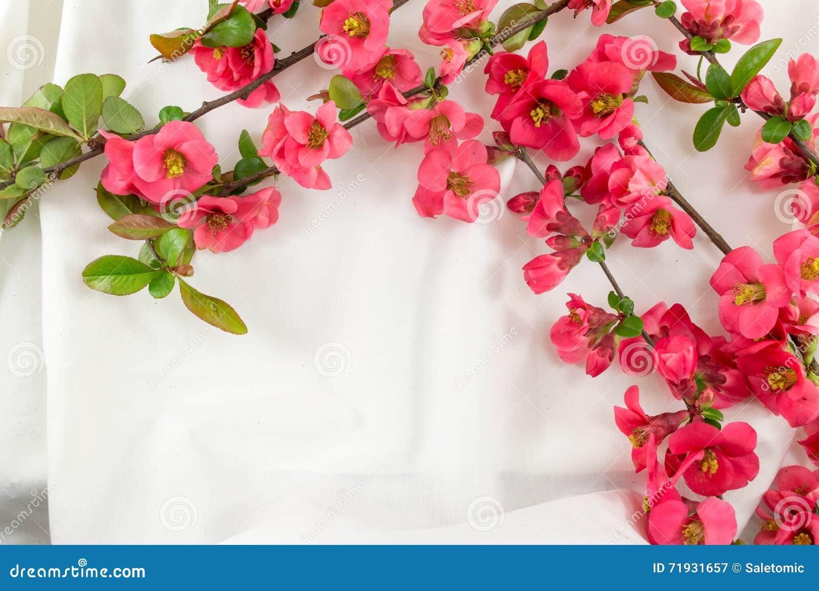 Цветки японца розовые на белой ткани