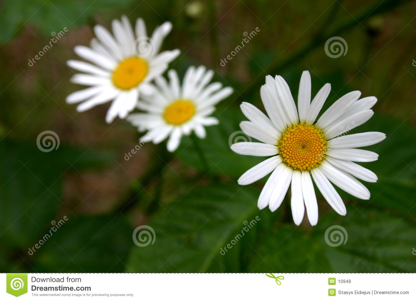 цветки 3