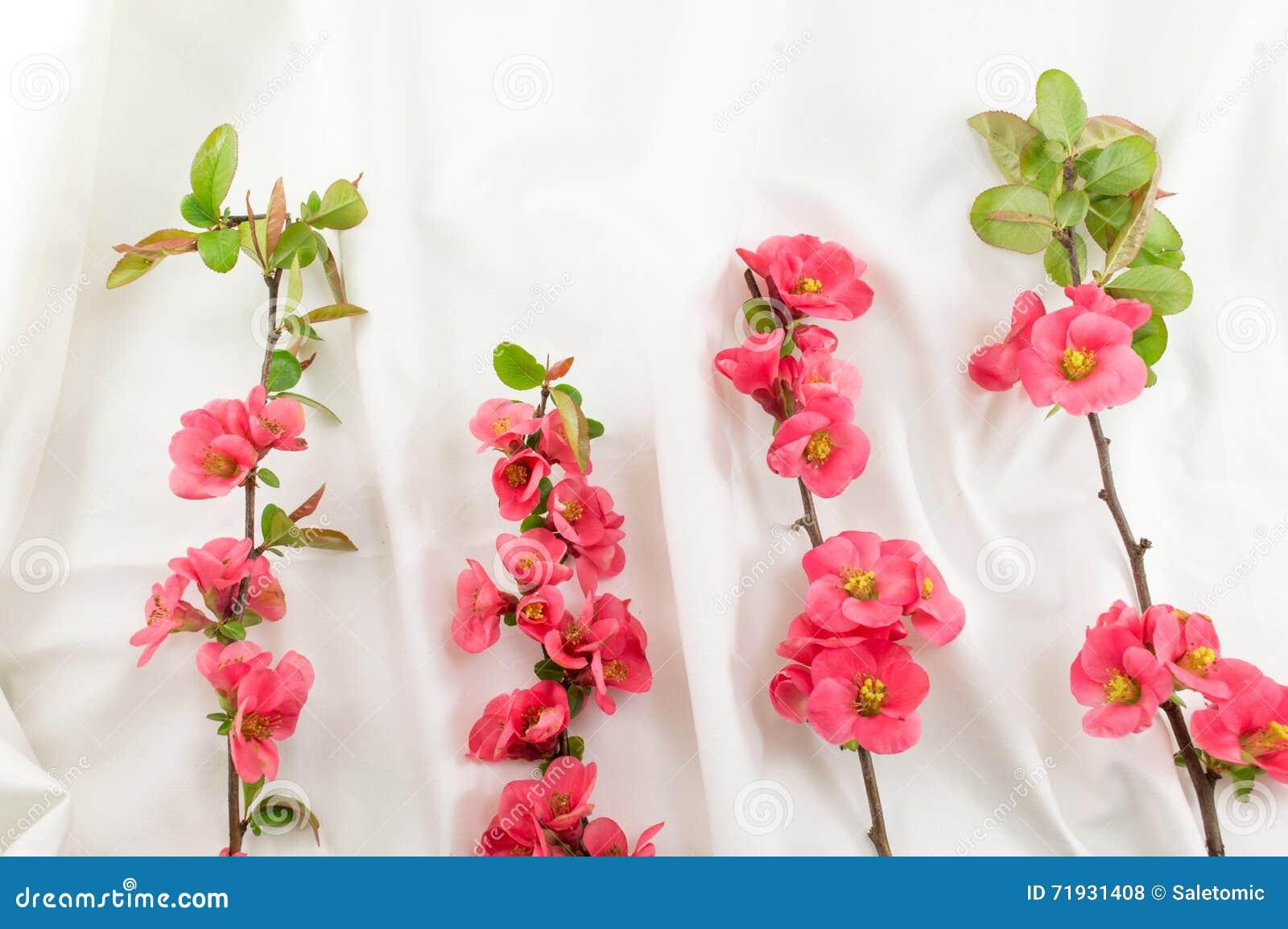Цветки rugosa Розы на белой ткани