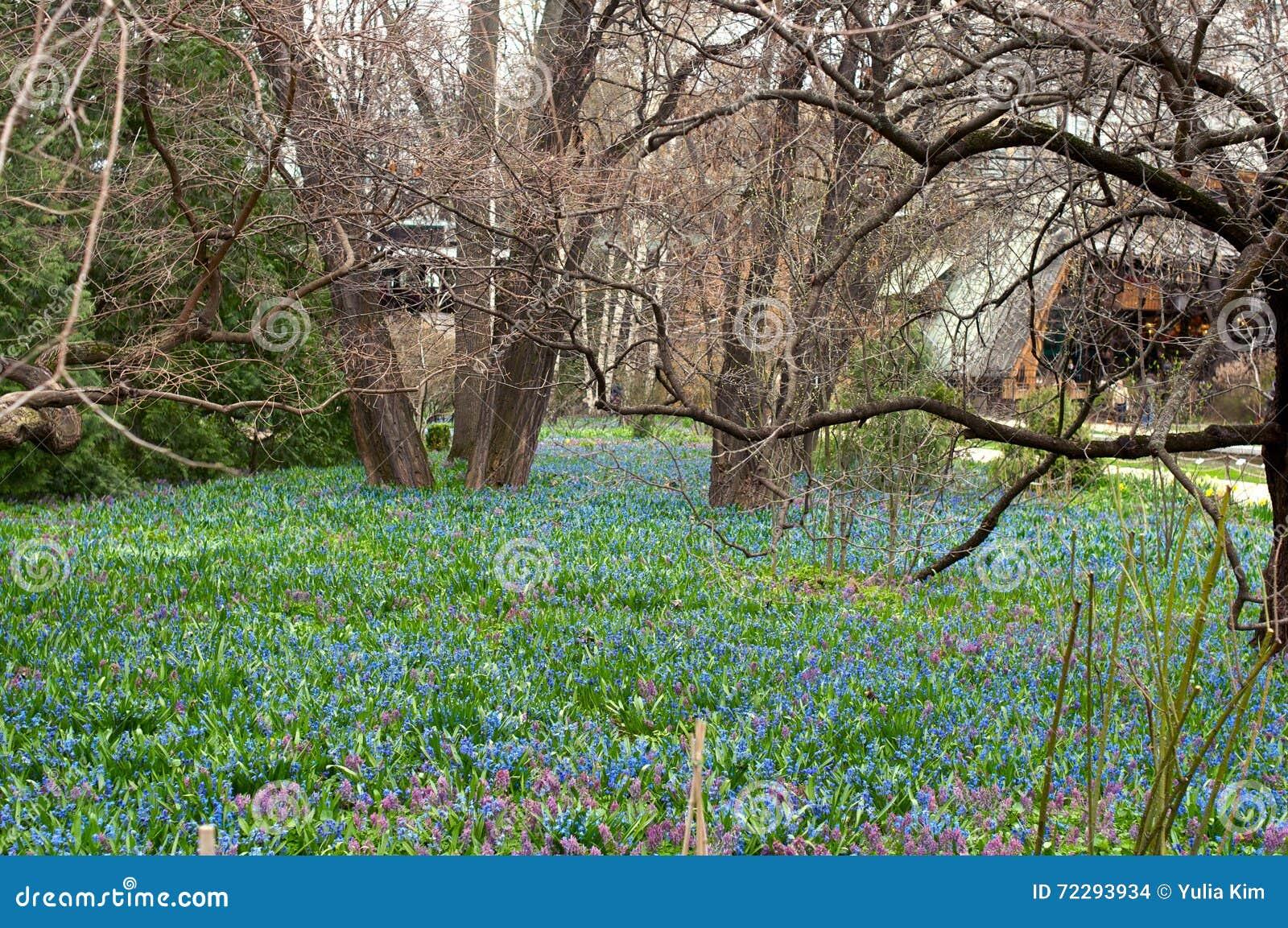 Download Цветник в лесе стоковое фото. изображение насчитывающей arachnids - 72293934