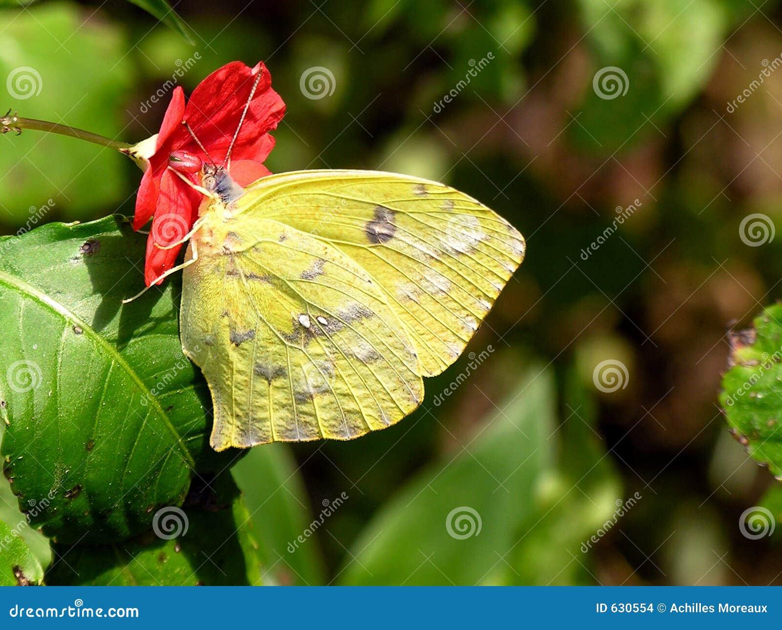 Download цветок бабочки стоковое фото. изображение насчитывающей муха - 630554