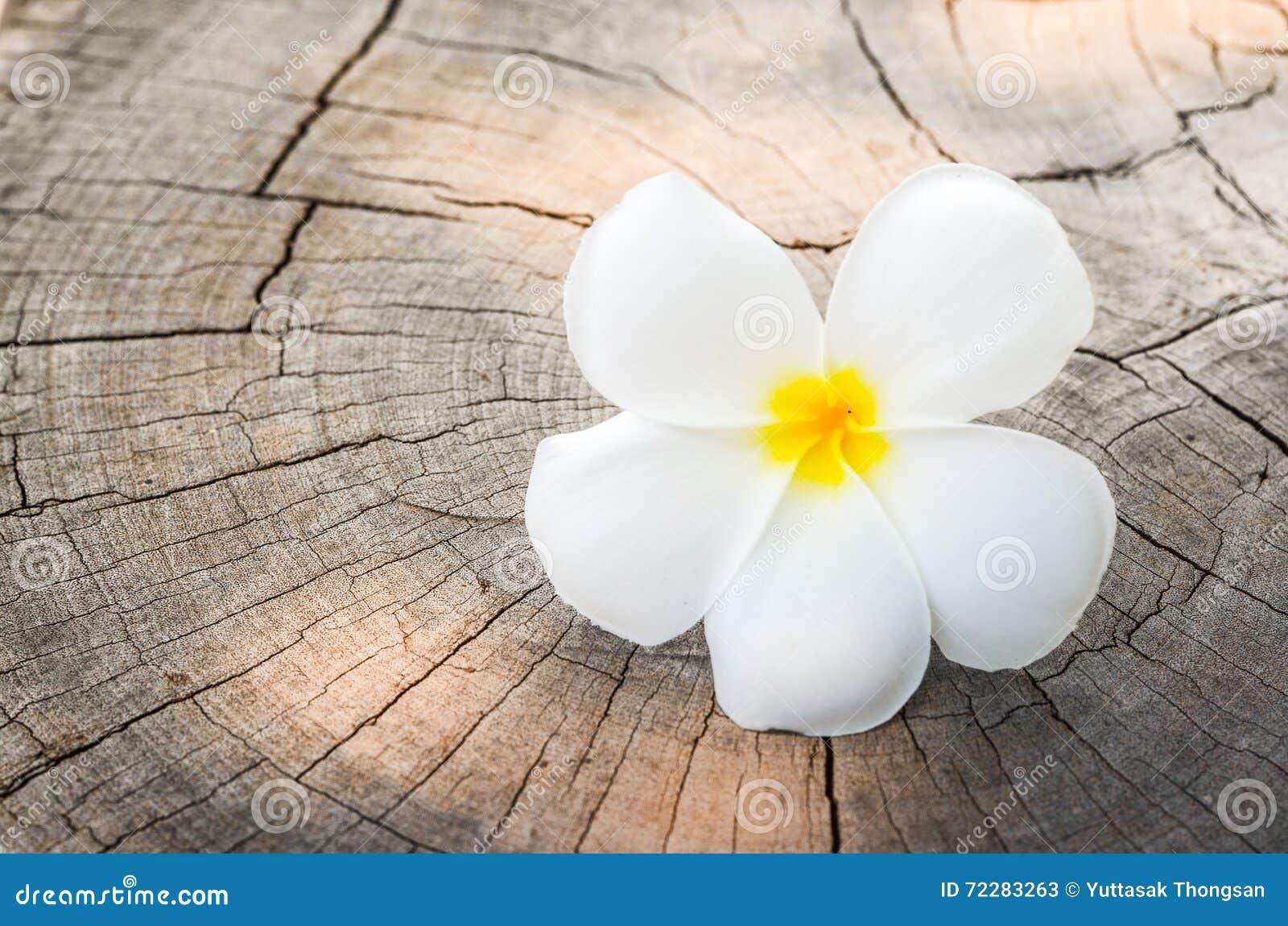 Download Цветок белого Frangipani тропический Стоковое Изображение - изображение насчитывающей тропическо, blooping: 72283263