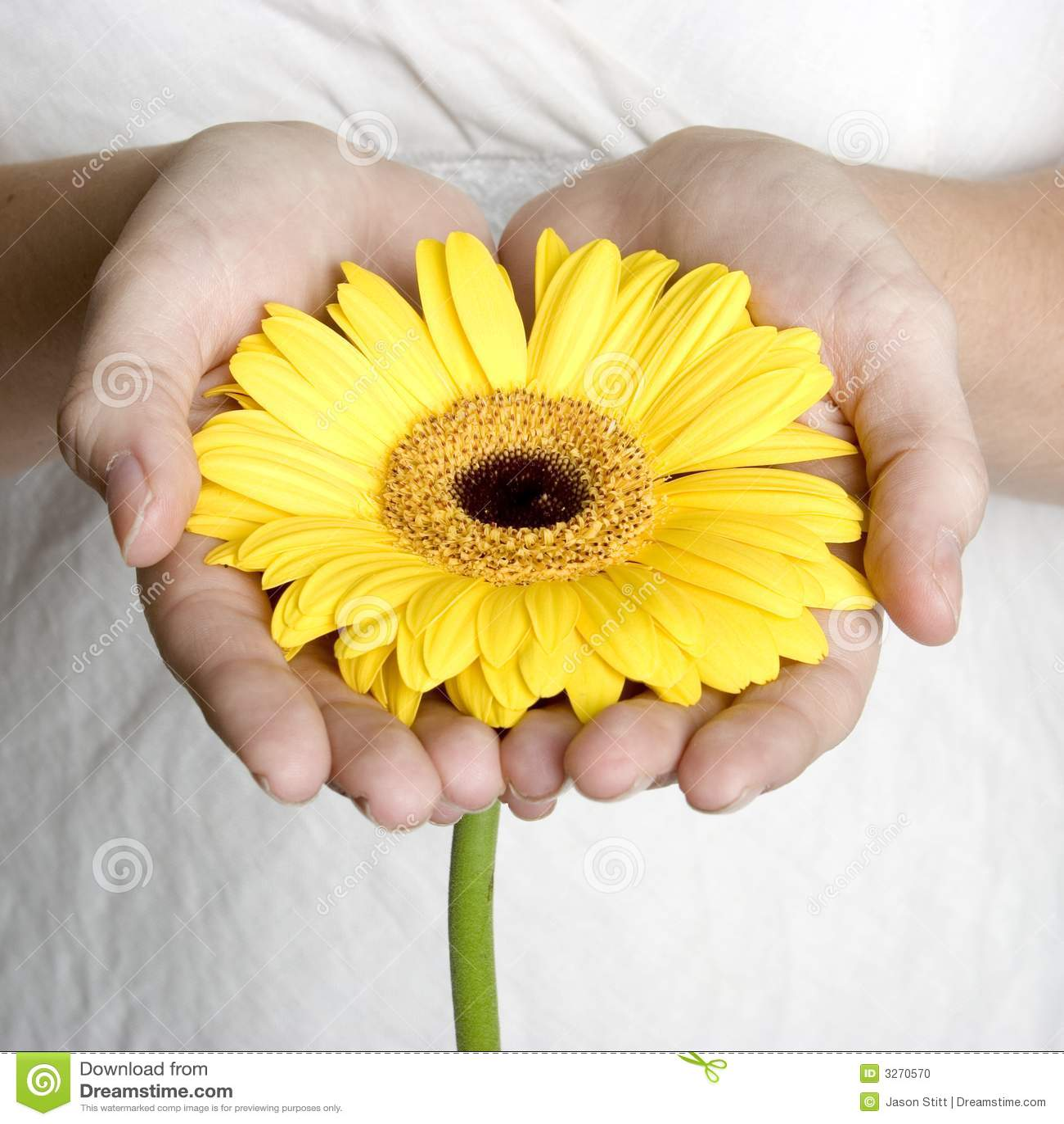 цветок вручает удерживание
