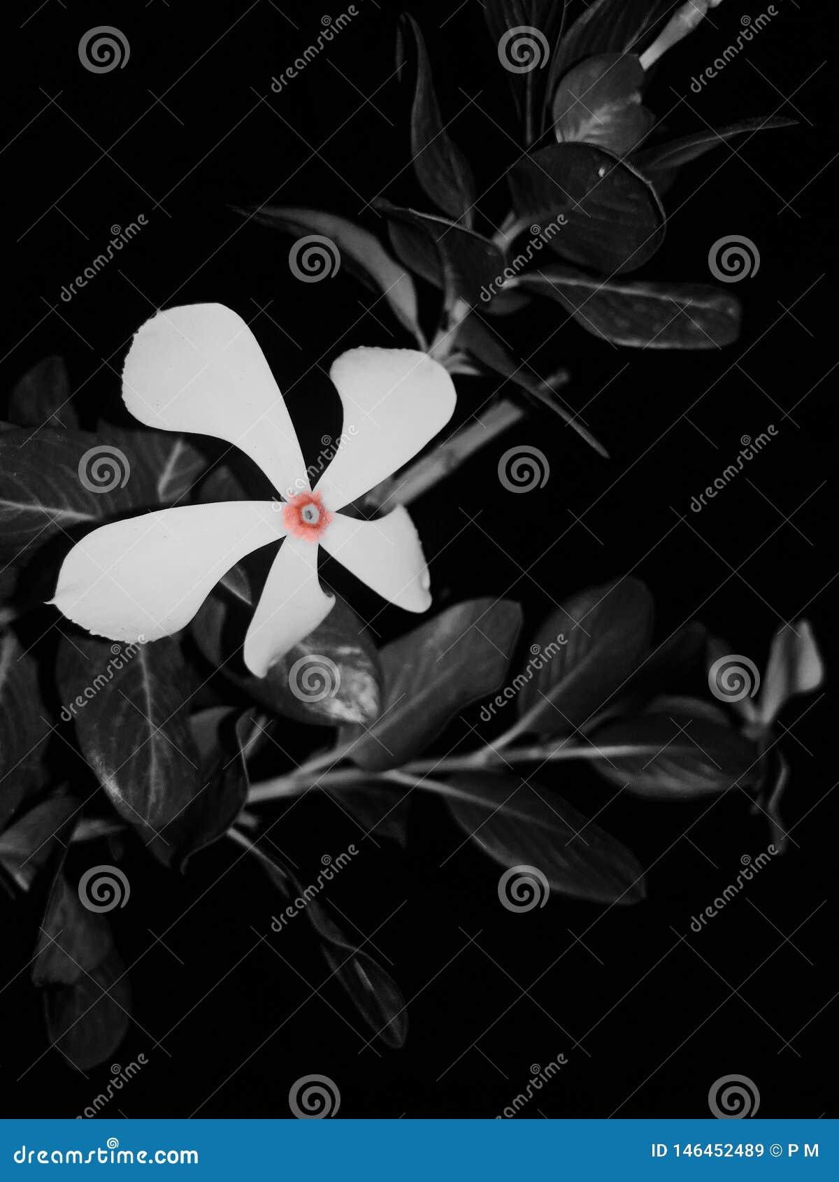 Цветок выплеска цвета