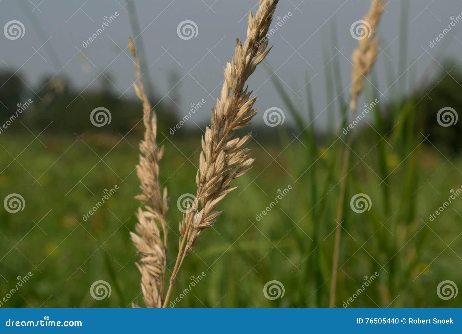 Цветок в поле